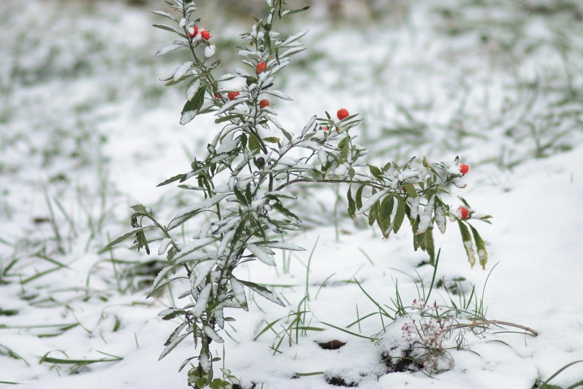 snow flowers by Alexey Komarov