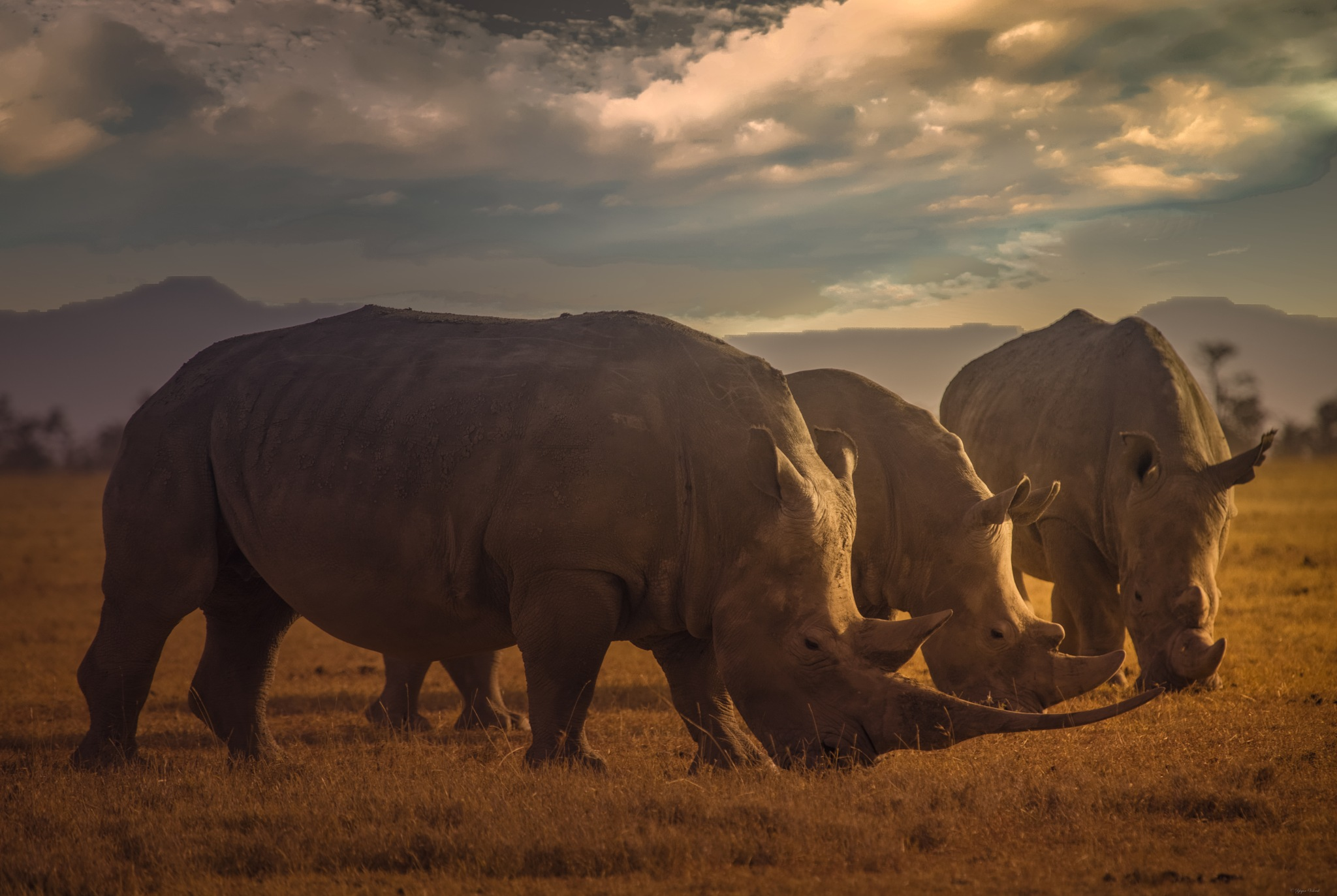 A rhino family in the wild. by Yegor & Tanya