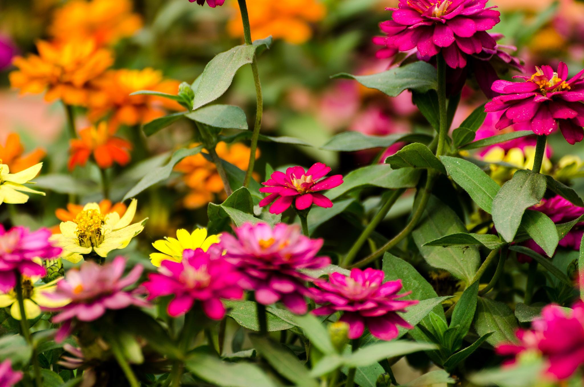 Flowers by Mahbub Afzal Khan