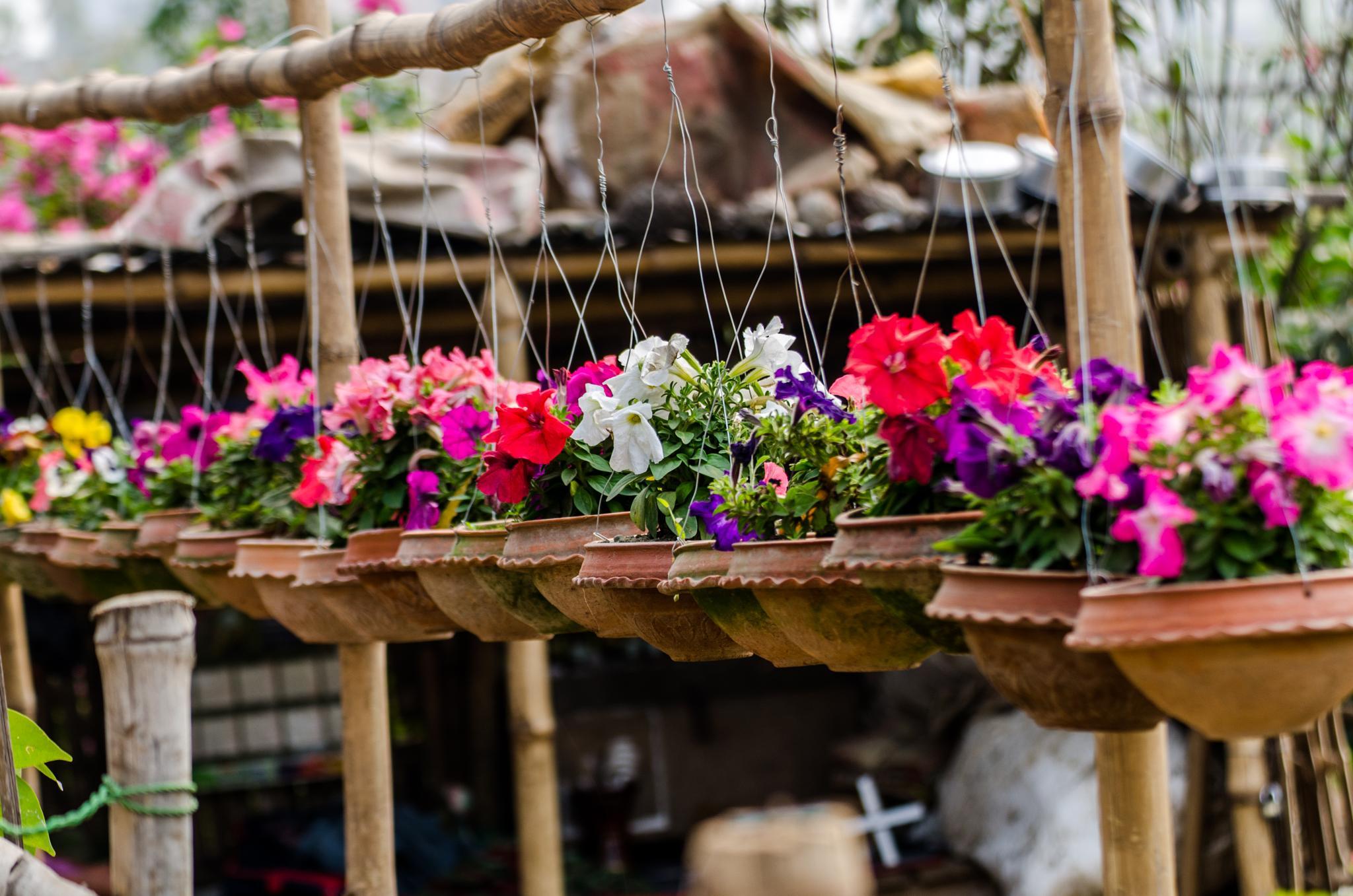Flower Shop by Mahbub Afzal Khan