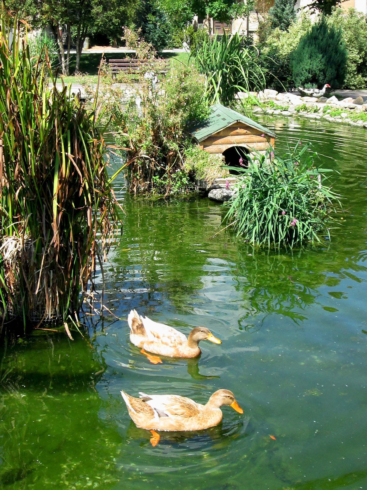 Ecological place with ducks, Prilep Macedonia by mirka_p