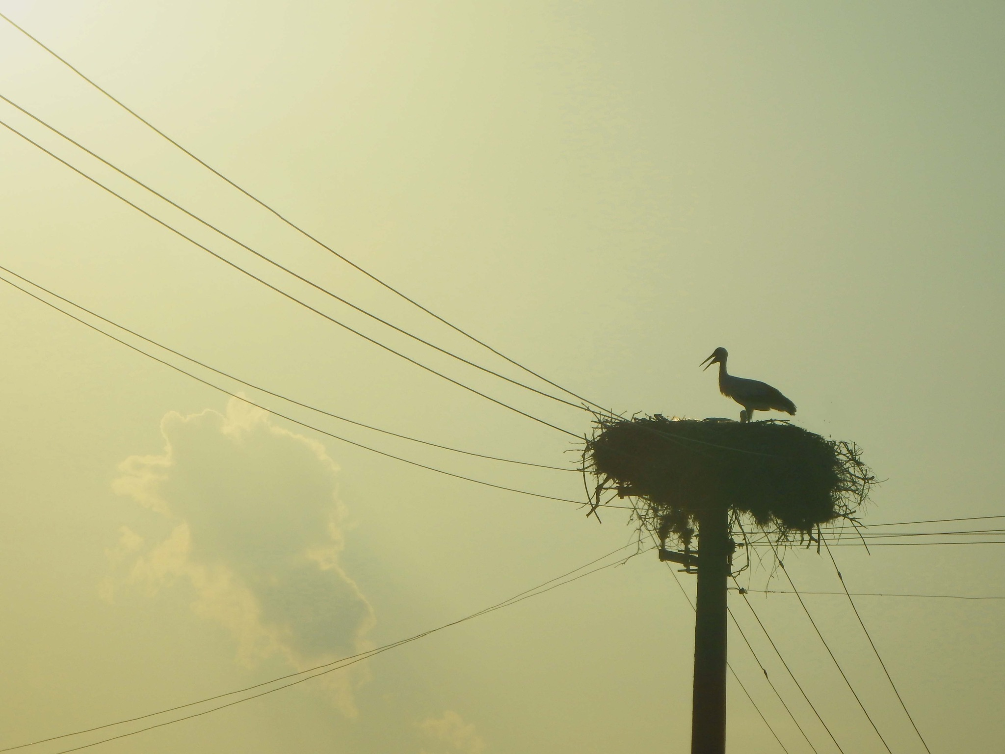 The storks nests on top of the power lines , Prilep Macedonia by mirka_p
