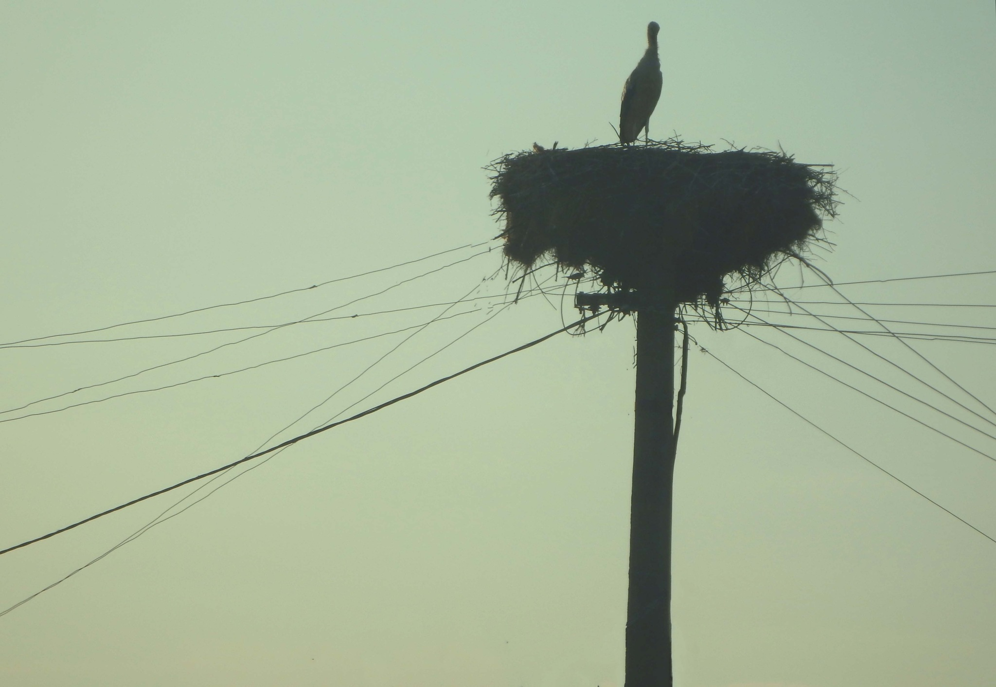 The stork nest on the top of electic pole , Prilep , Pelagonia Macedonia by mirka_p