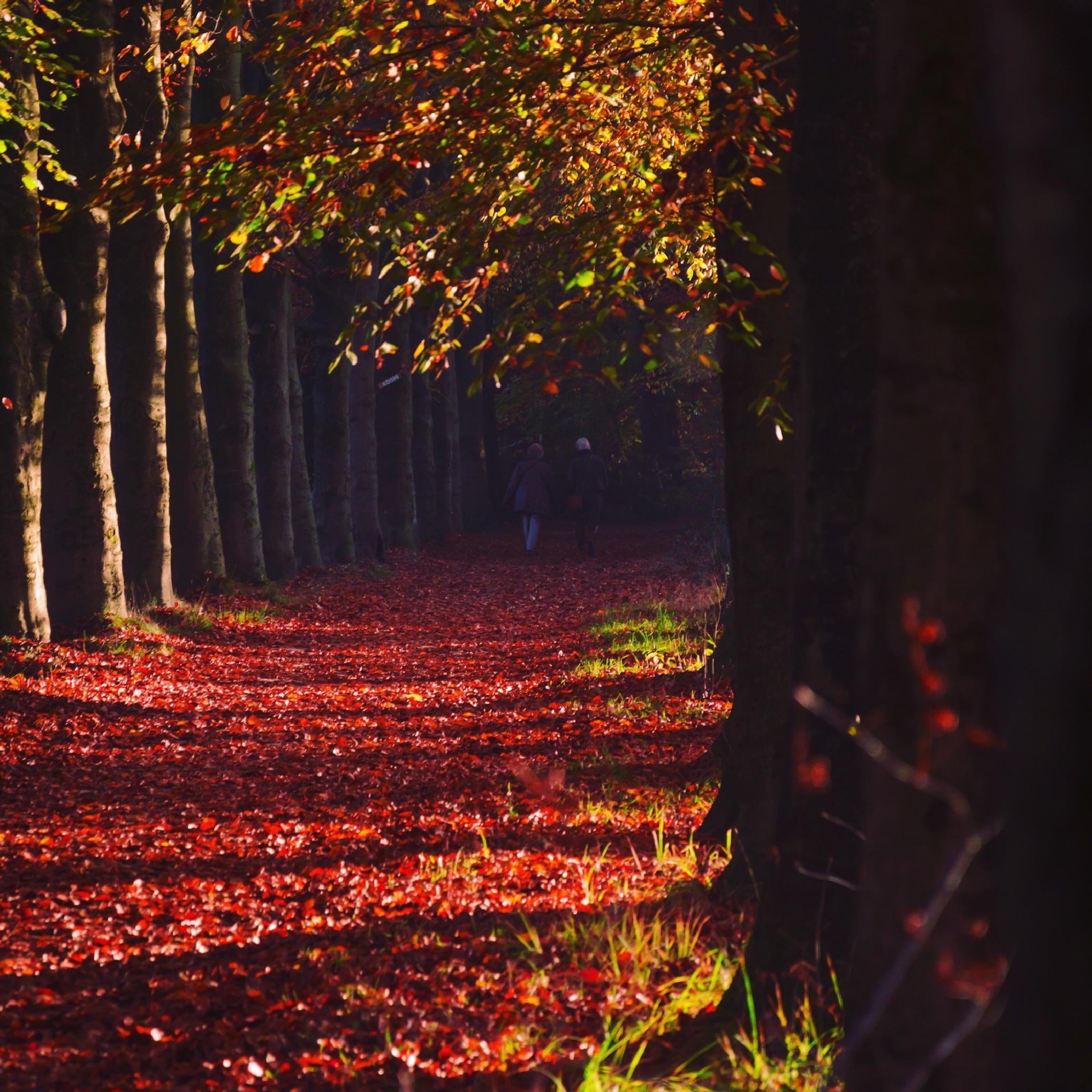 Autumn feelings by Bo Wensink