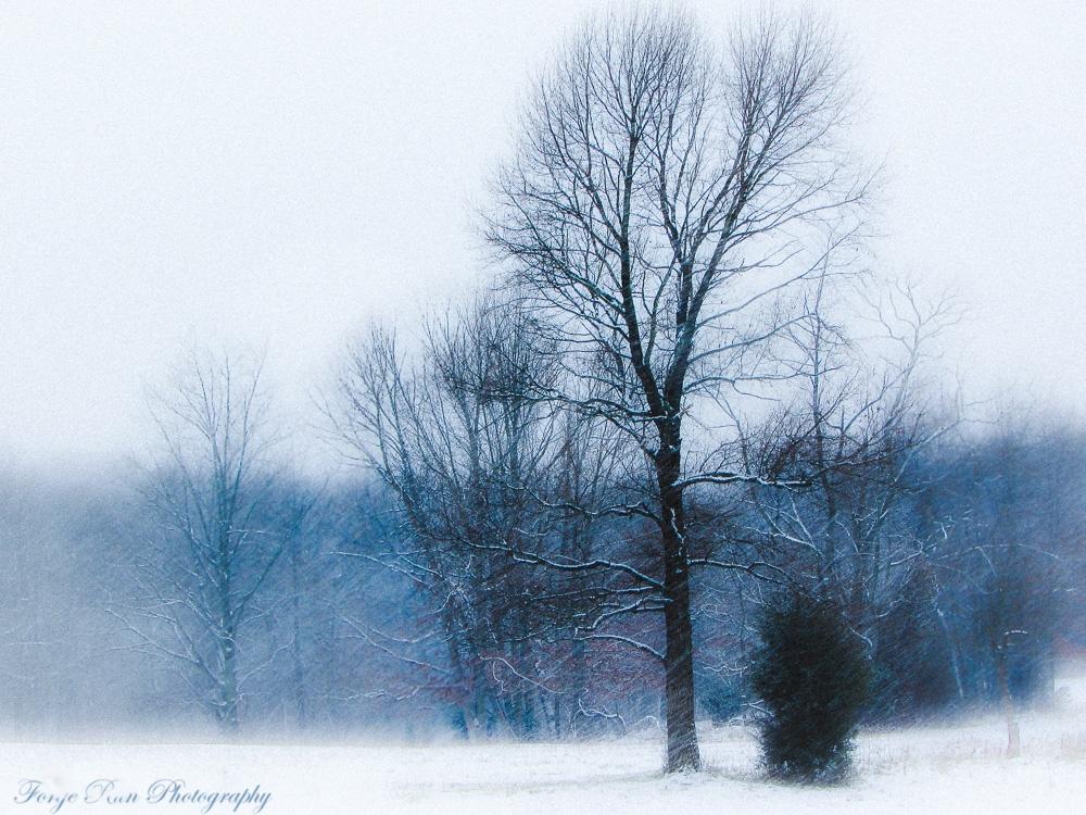 Winter tree. by elcogle3