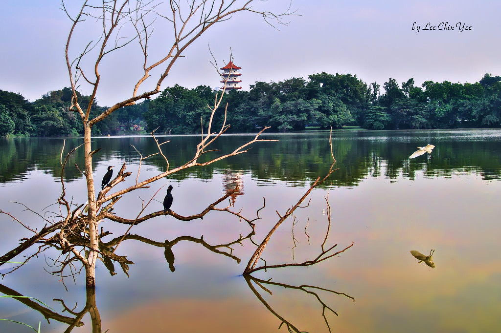 Jurong Lake by Chinyee