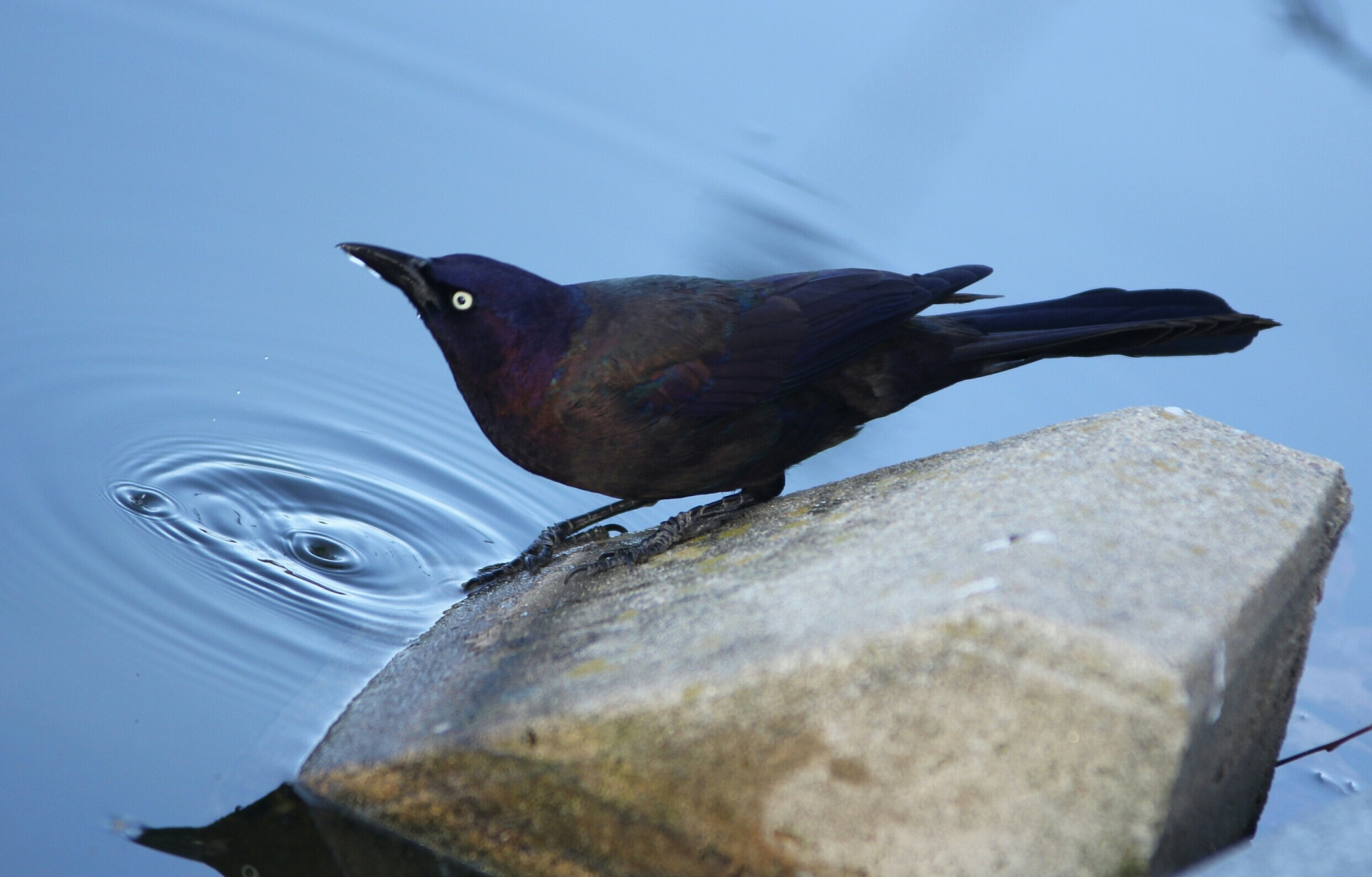 Black Bird  by bkhuong