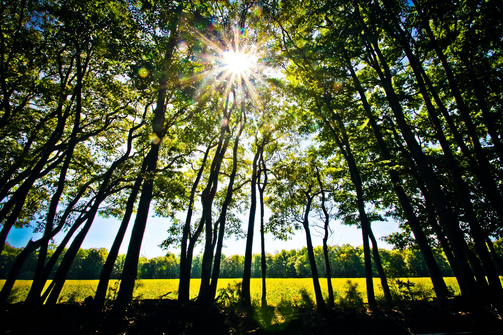 Sun Screen  by bkhuong