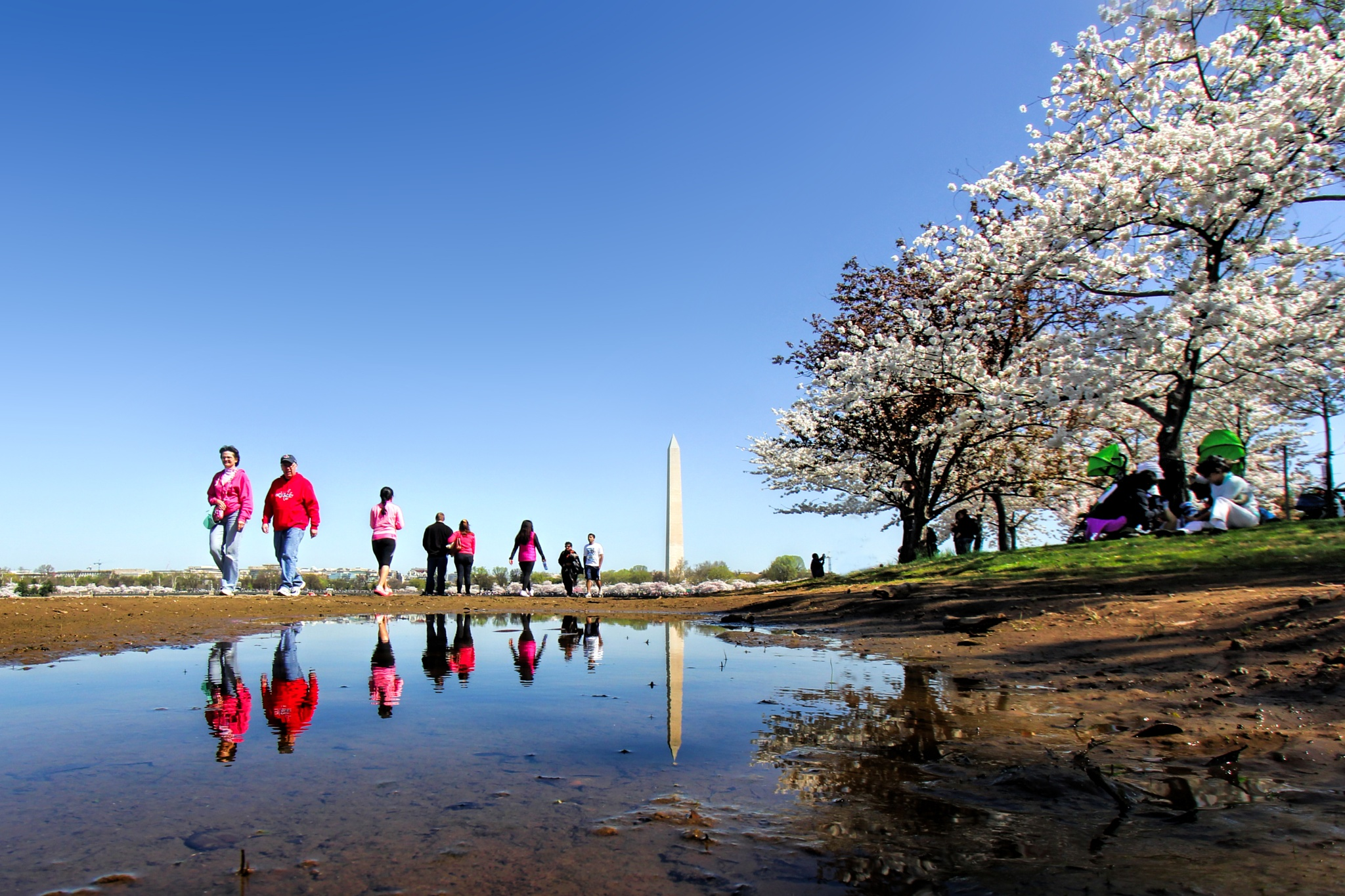 Spring in Washington DC by bkhuong