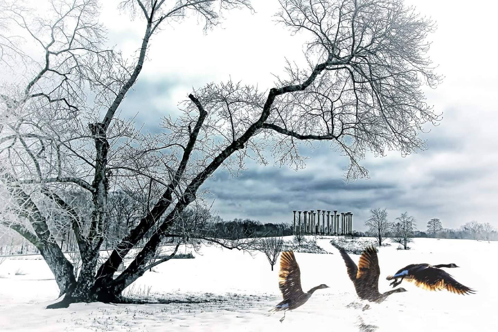 DC Winter by bkhuong