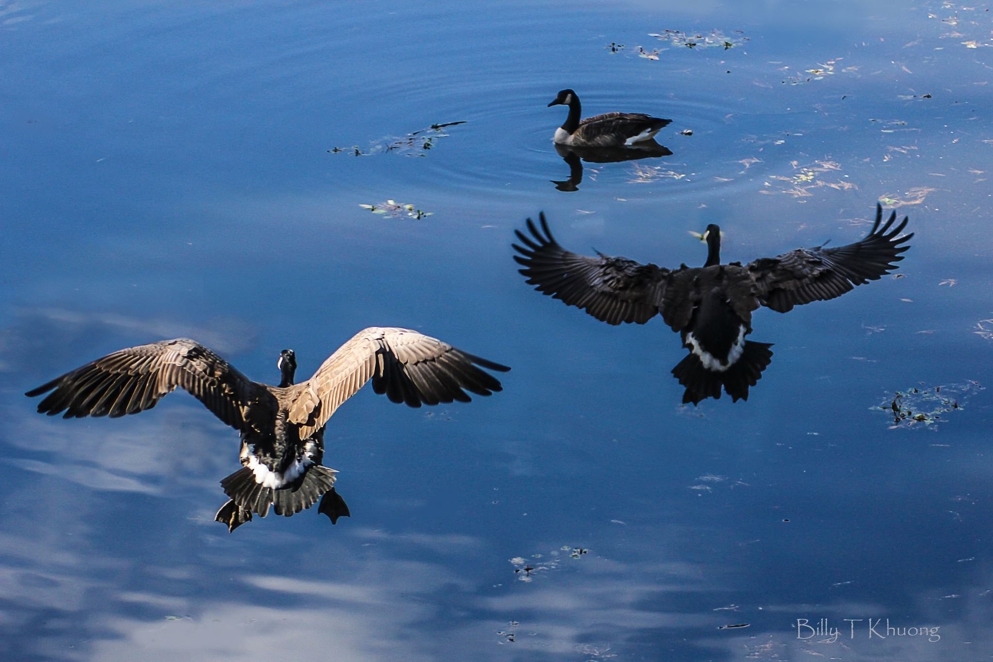 Fly away by bkhuong