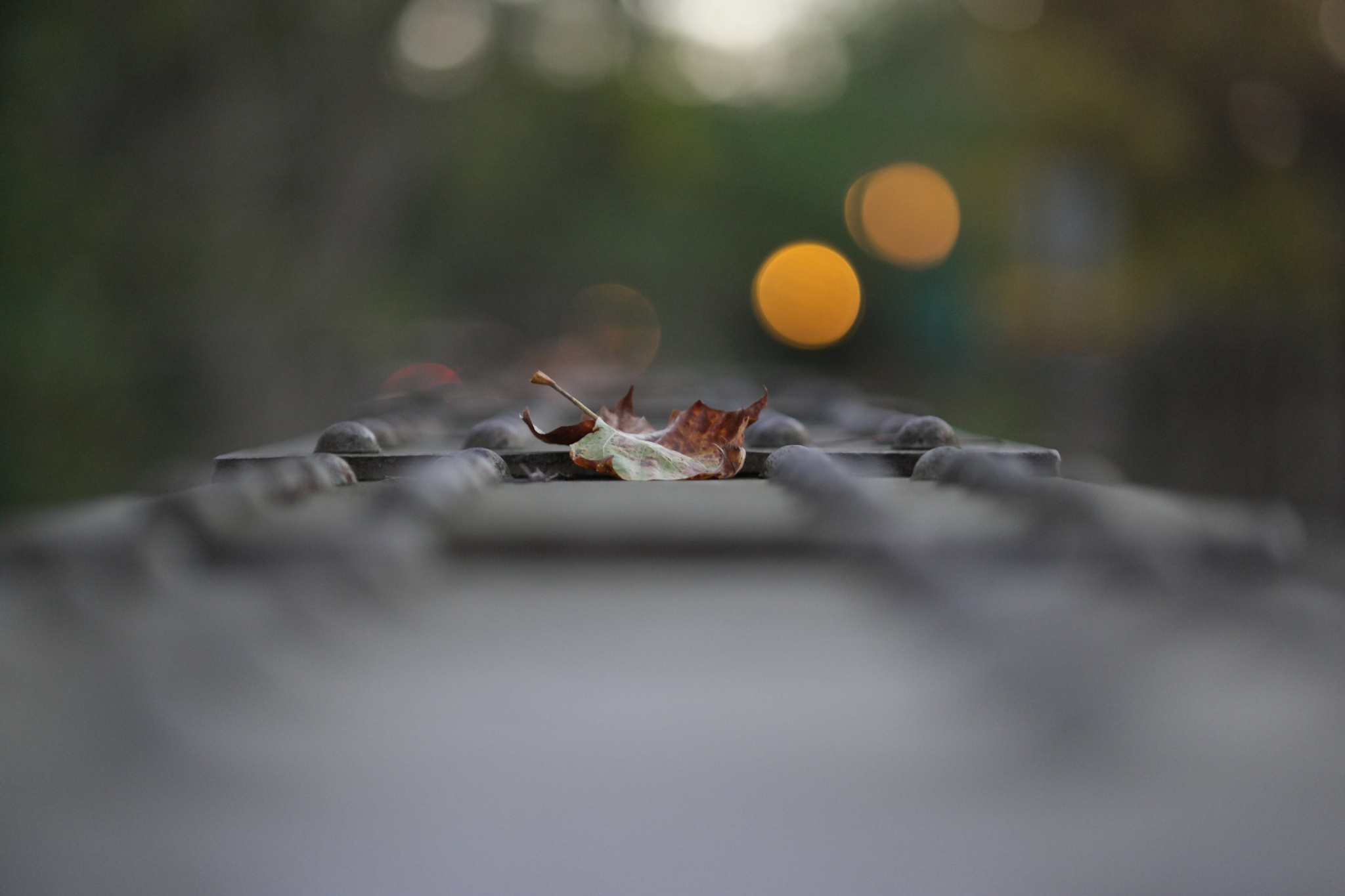 Leaf on a Bridge by Tiki Tim