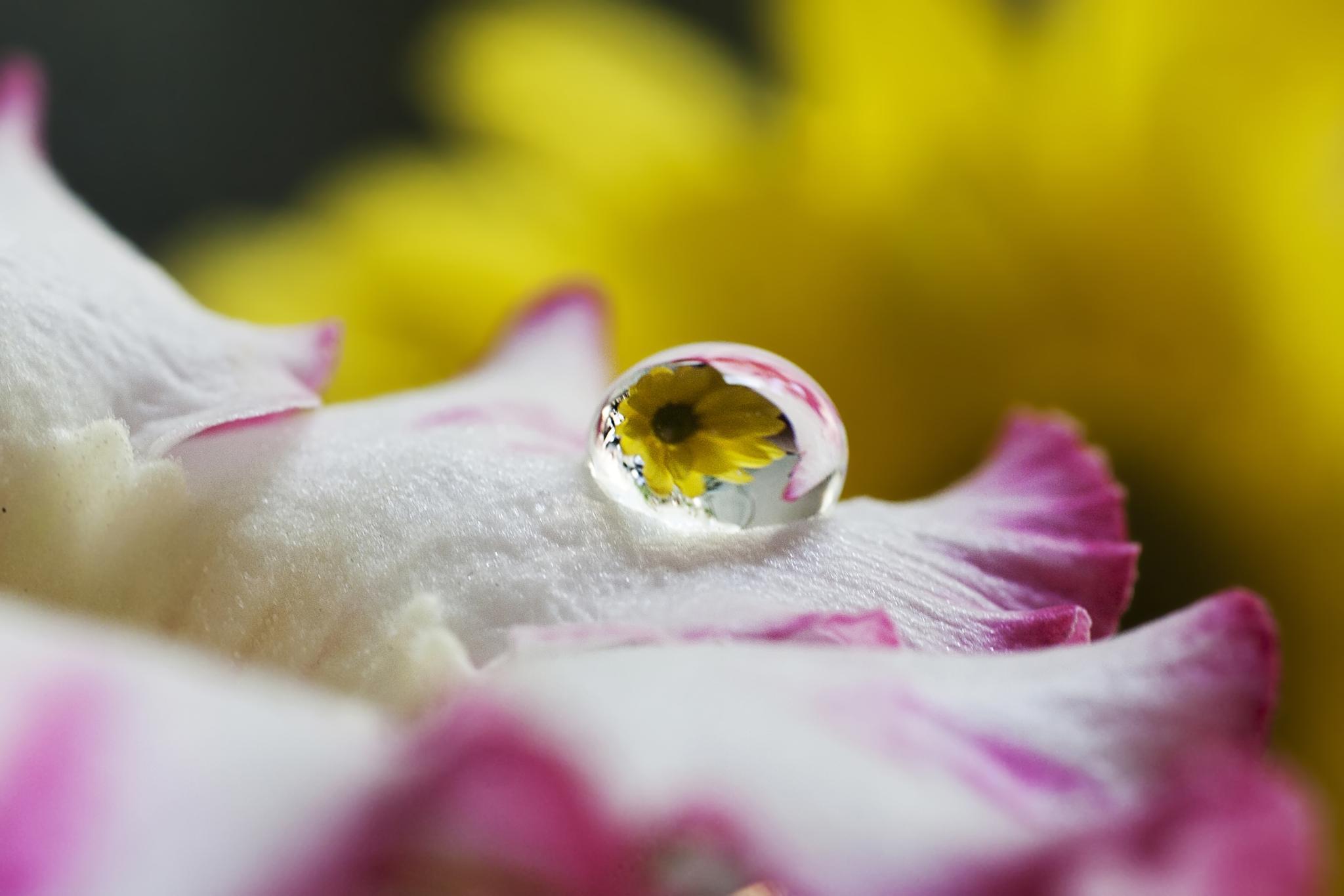 reflection by halimqomarudin