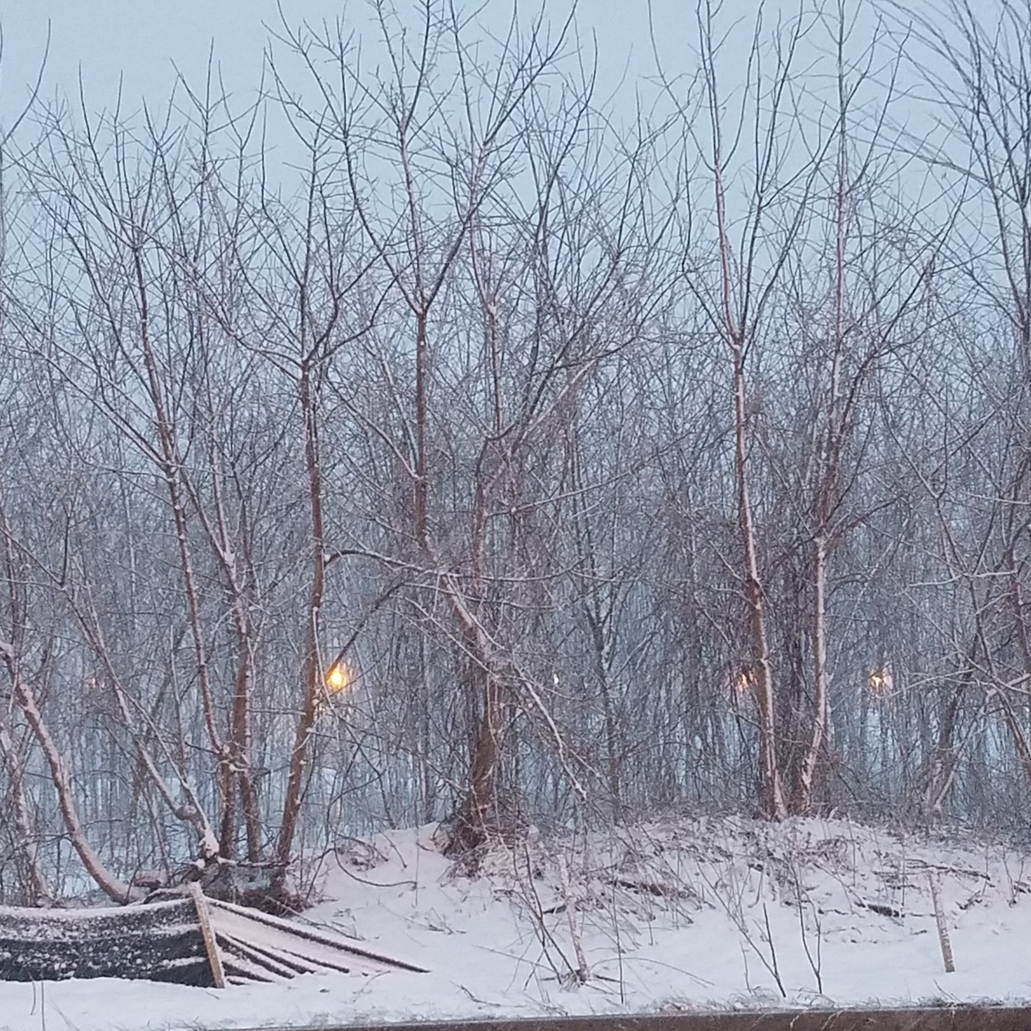 Winter trees  by work by KaMyal