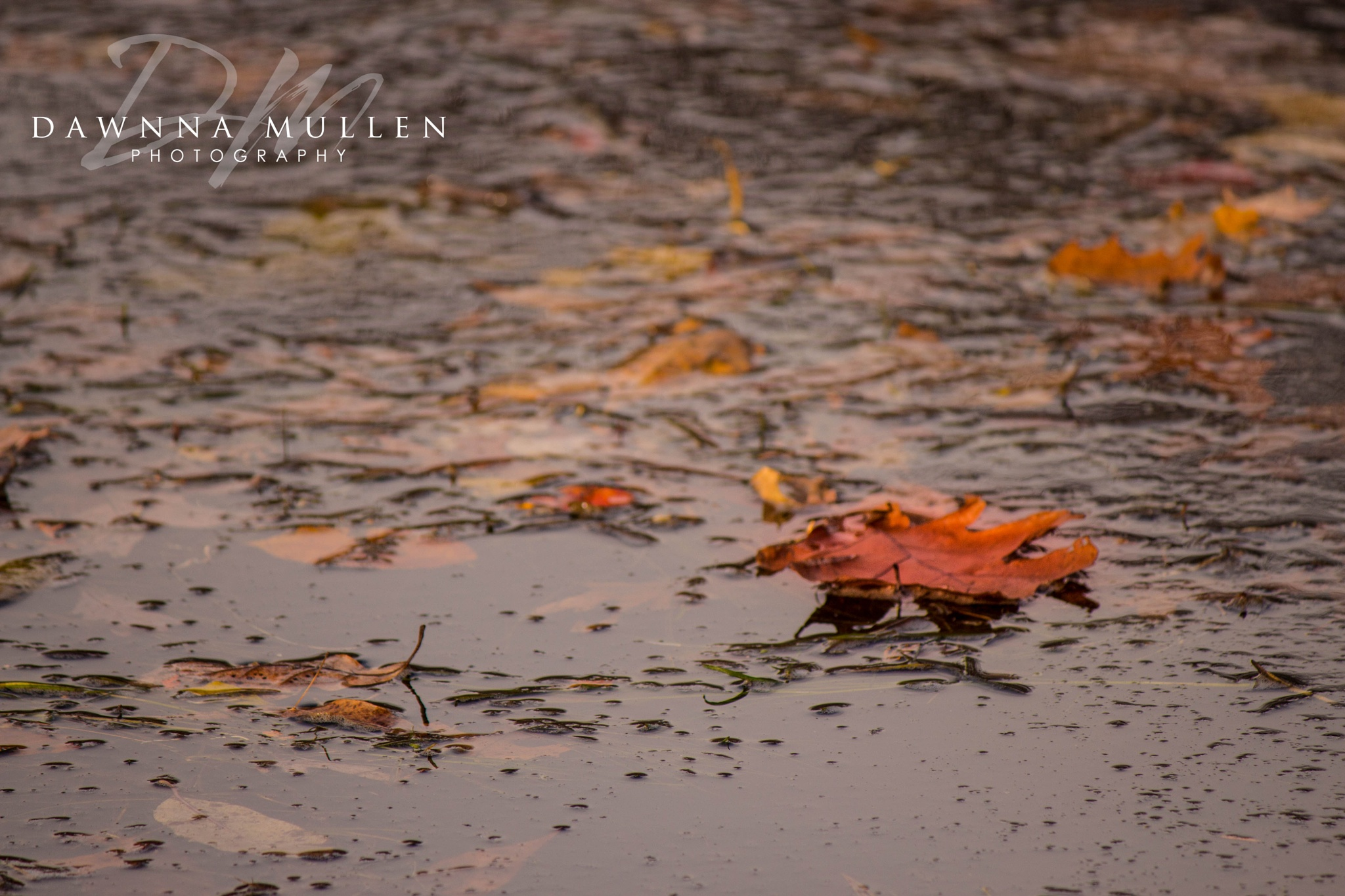 leafs and water by Dawnna Mullen