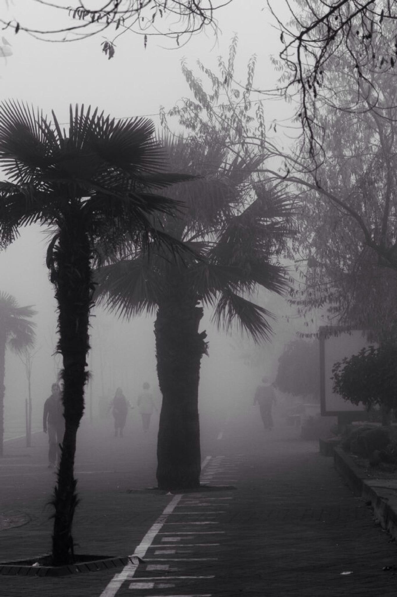 Fog near the beach by ab photography