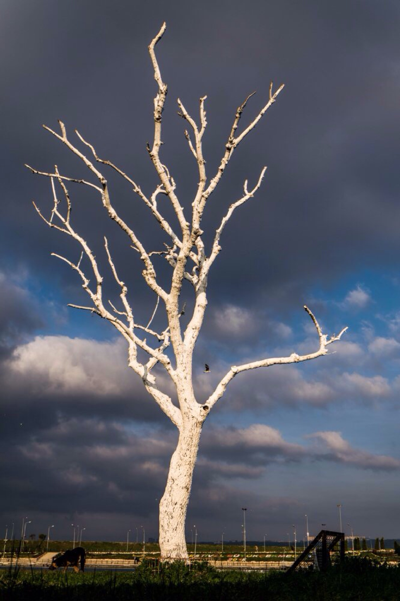 White Tree by ab photography