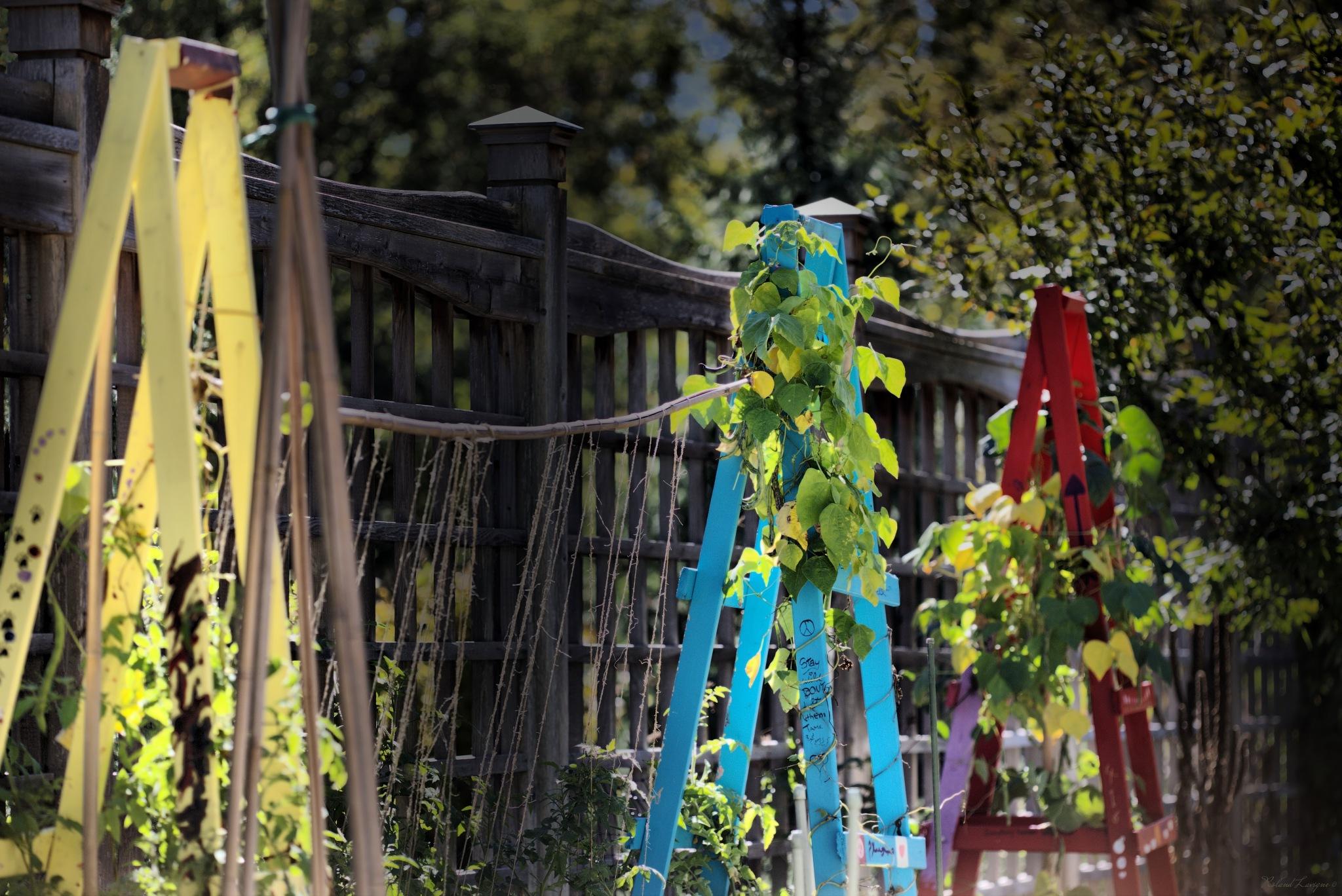 Plants&Ladders by Roland Lavigne