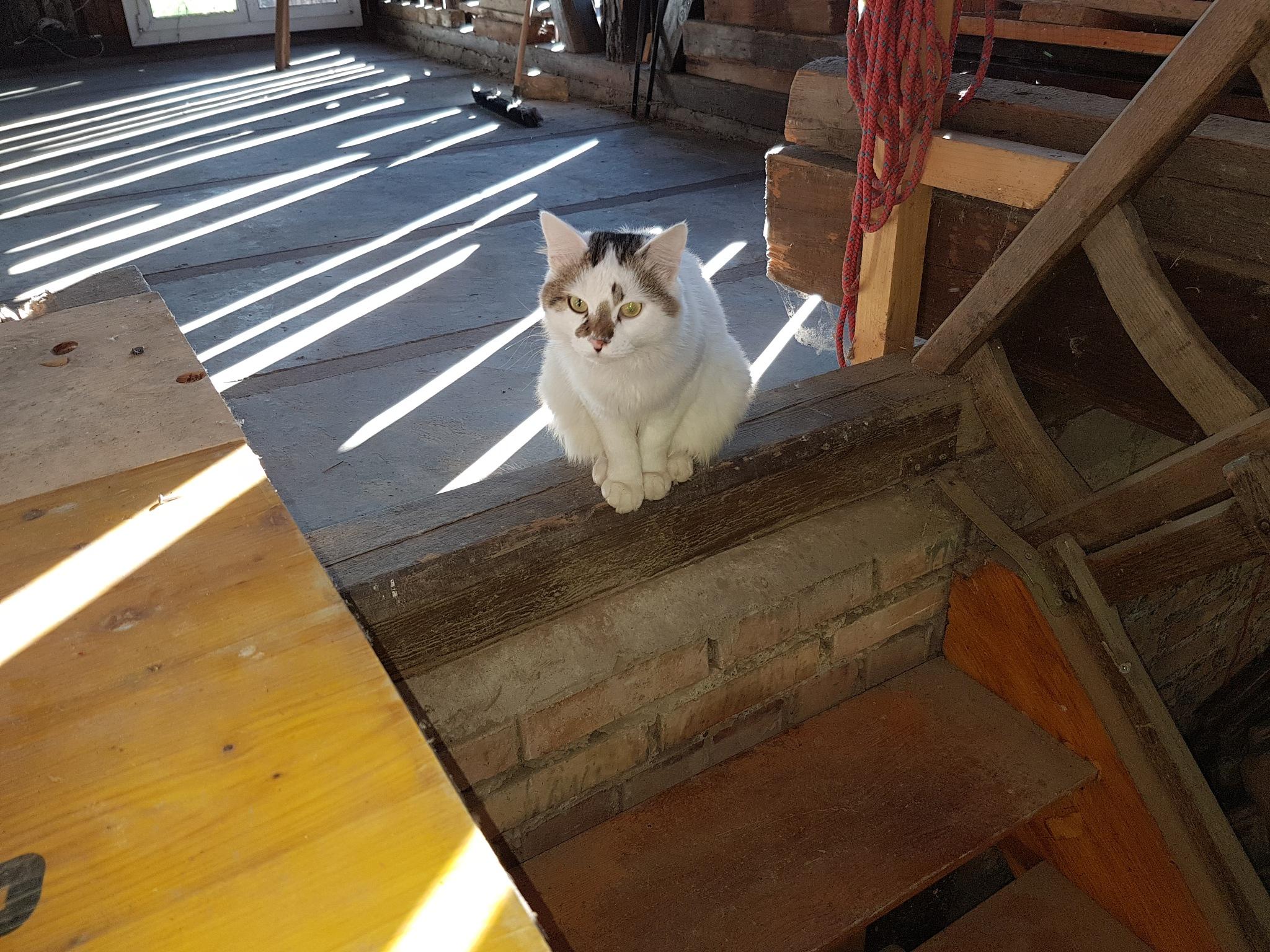 Katze by rosiott708