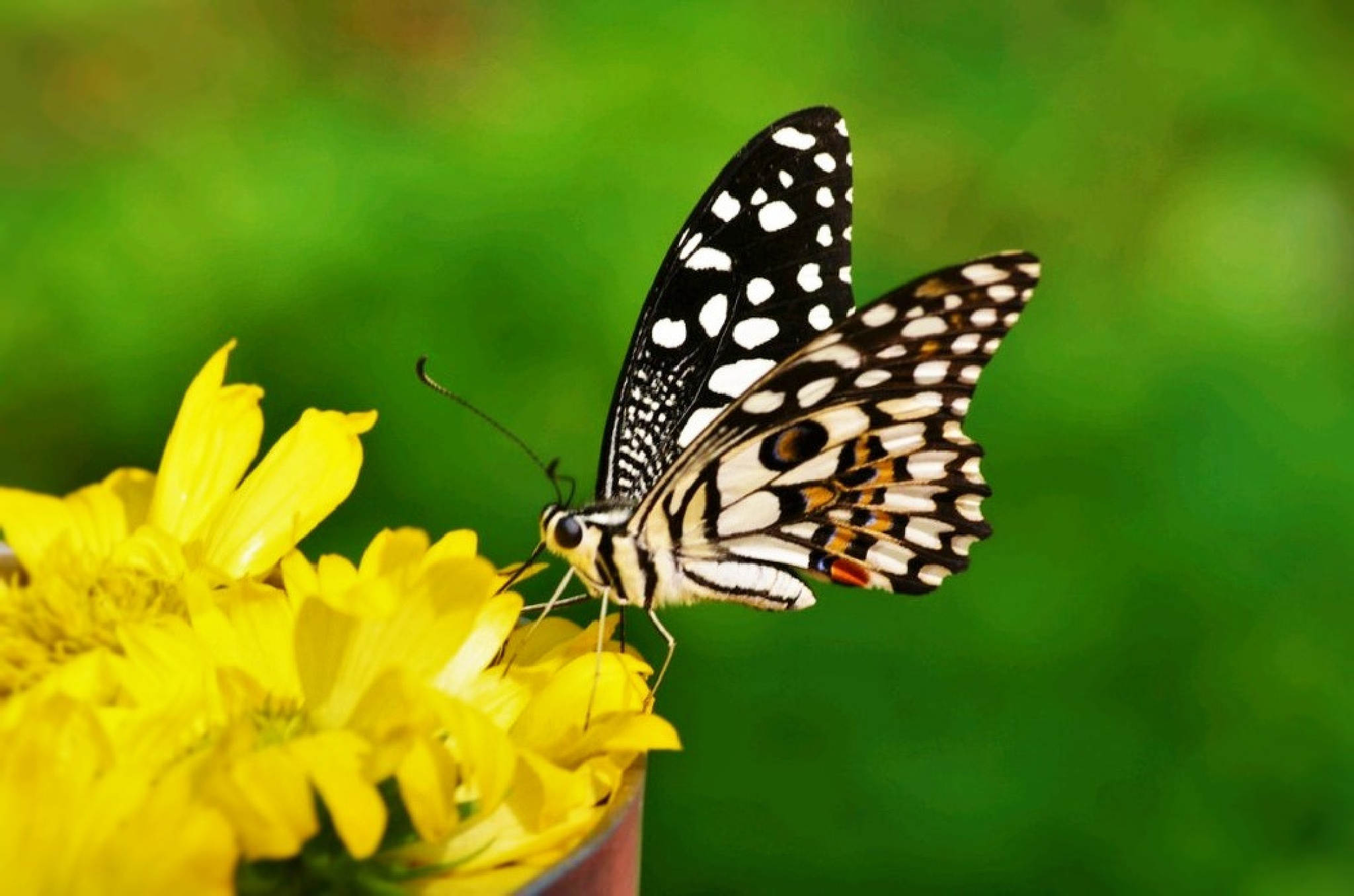 Butterfly by pravnisha