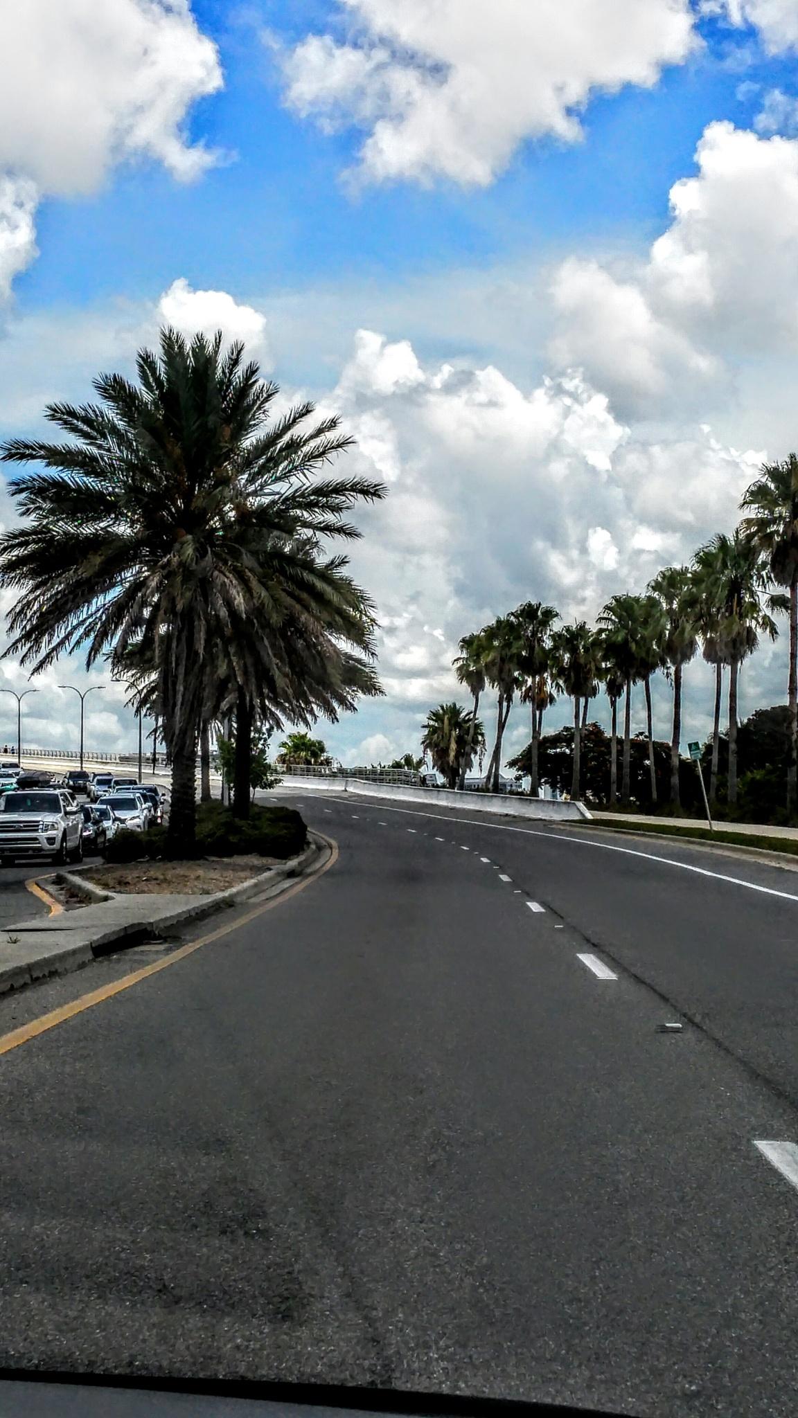 Sarasota Florida by Dawn Smith
