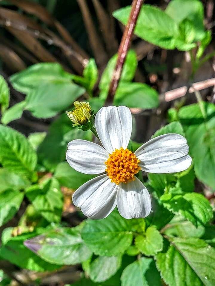 A flower by Dawn Smith