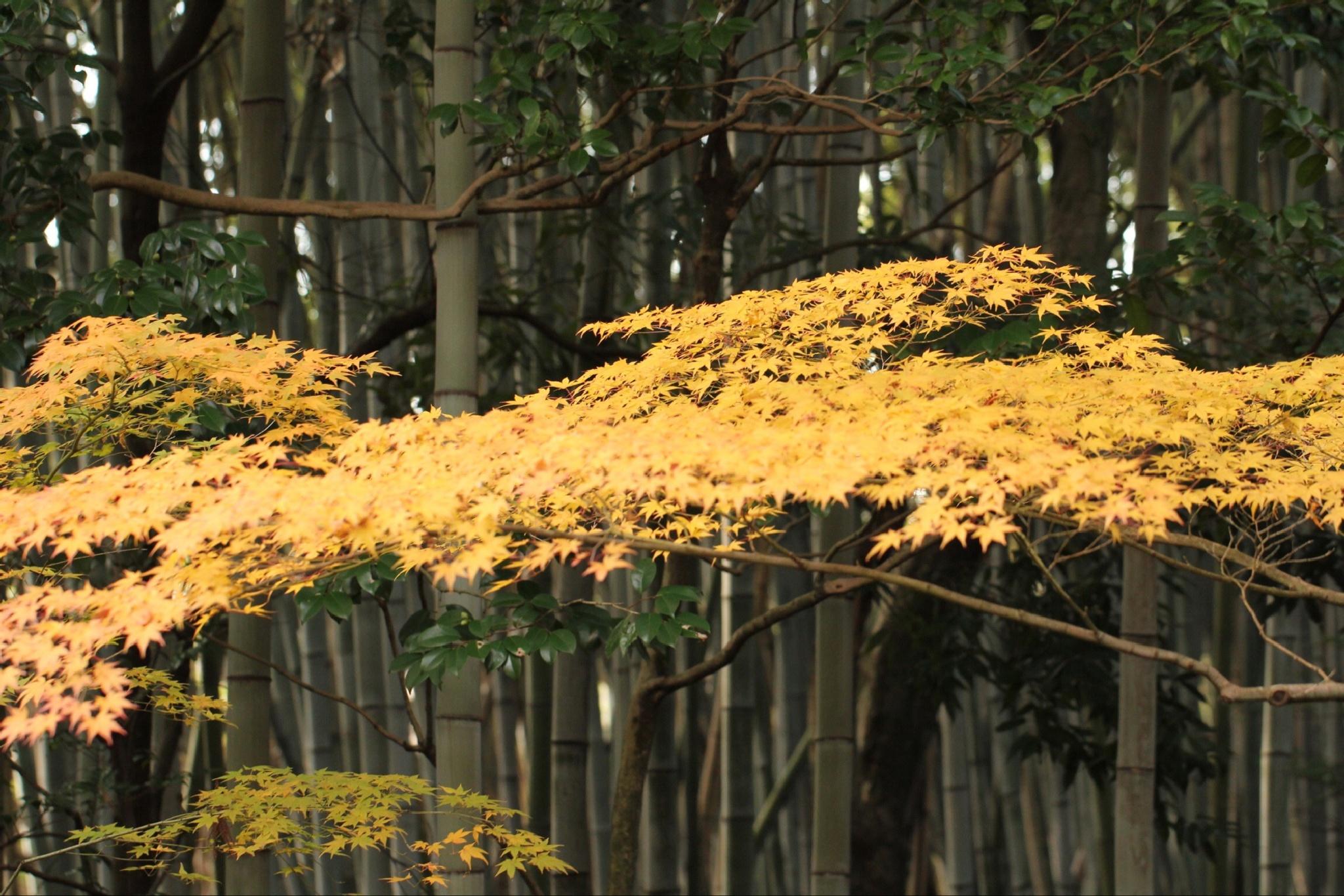 Autumn in Japan by Brian Rudder