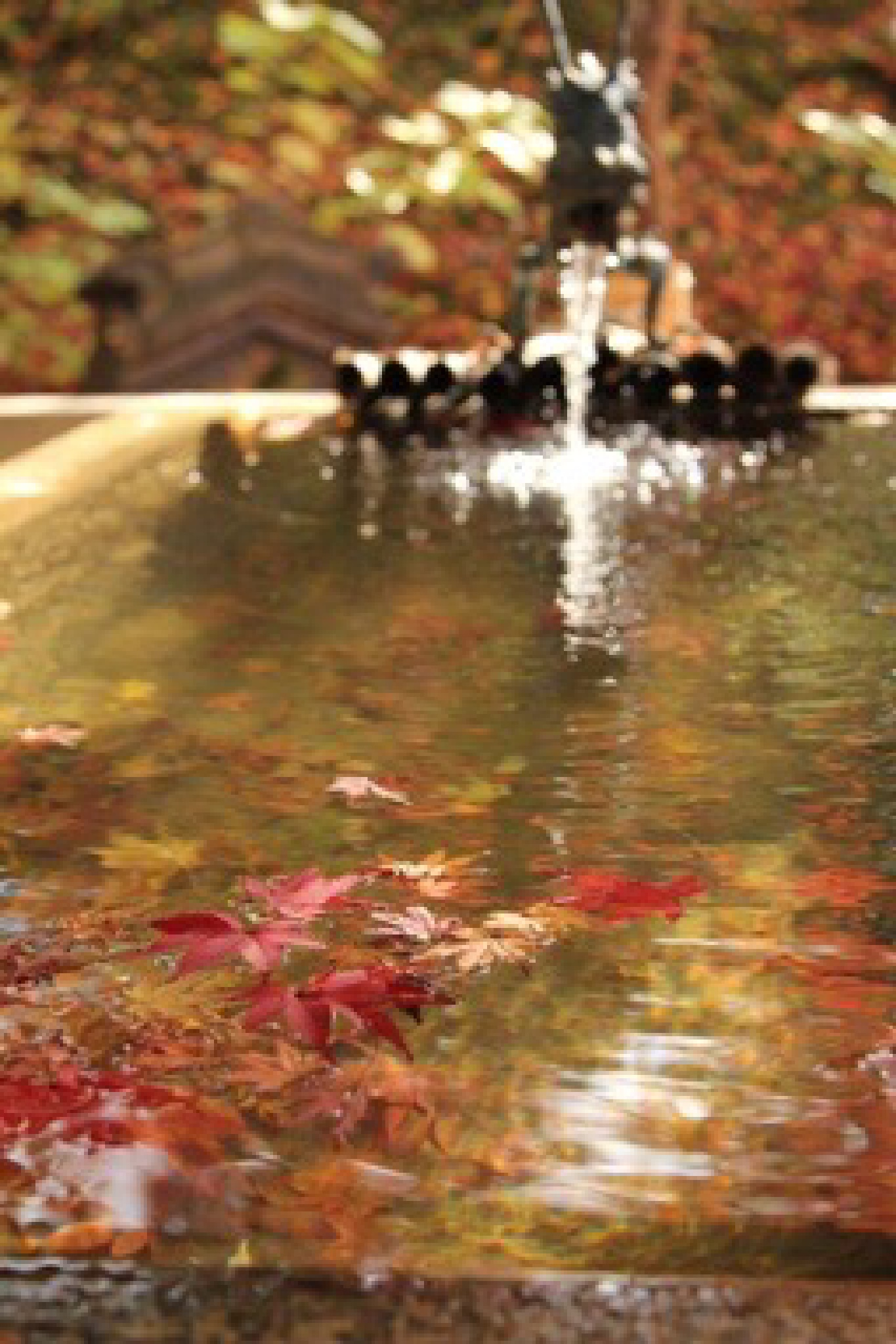 Water and Autumn by Brian Rudder