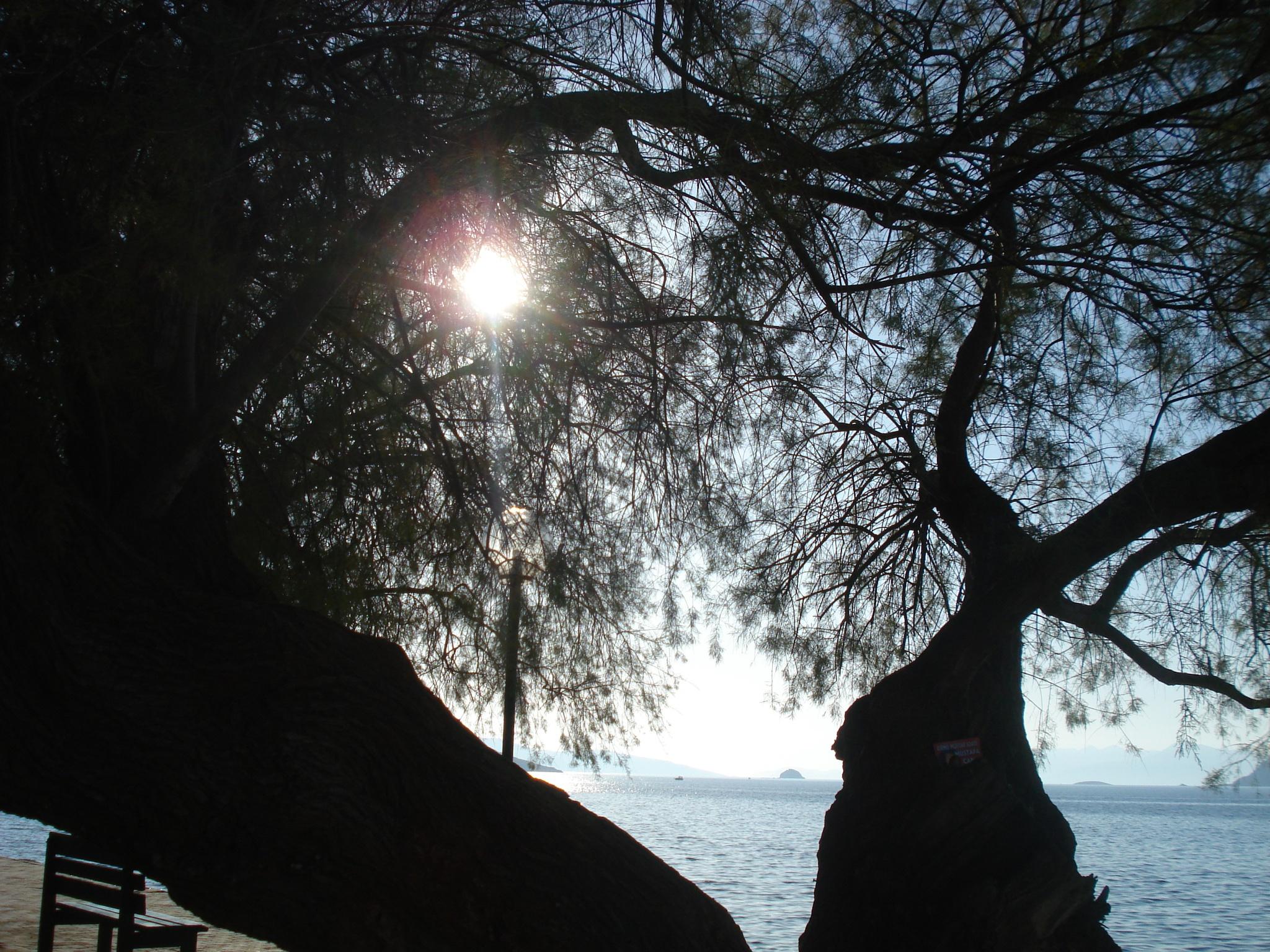 SUN SHINE  IN A SOLAR DAY.. by GÜVEN YENERSOY