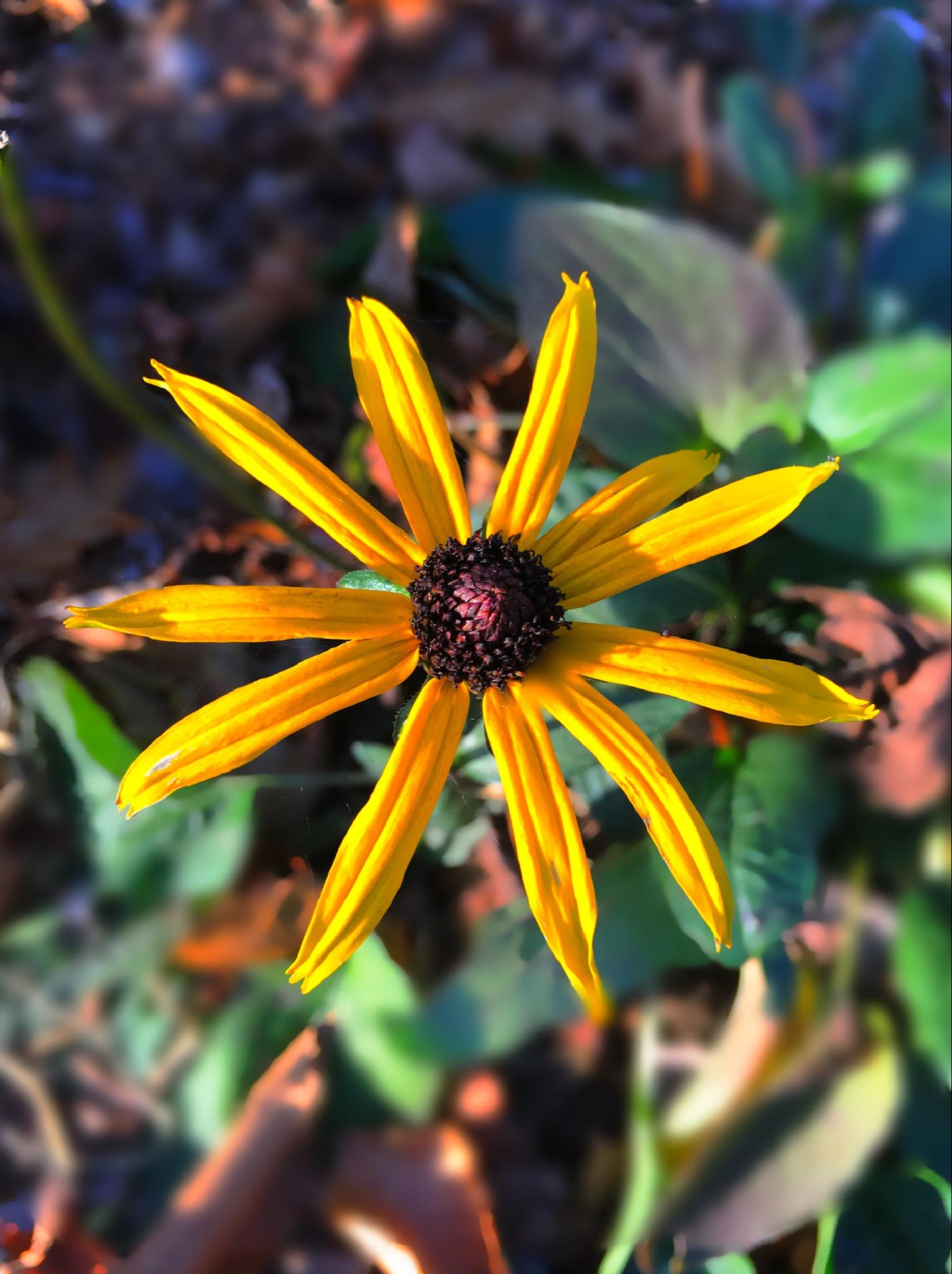 Last flower of fall by Memoriesbykelleejean