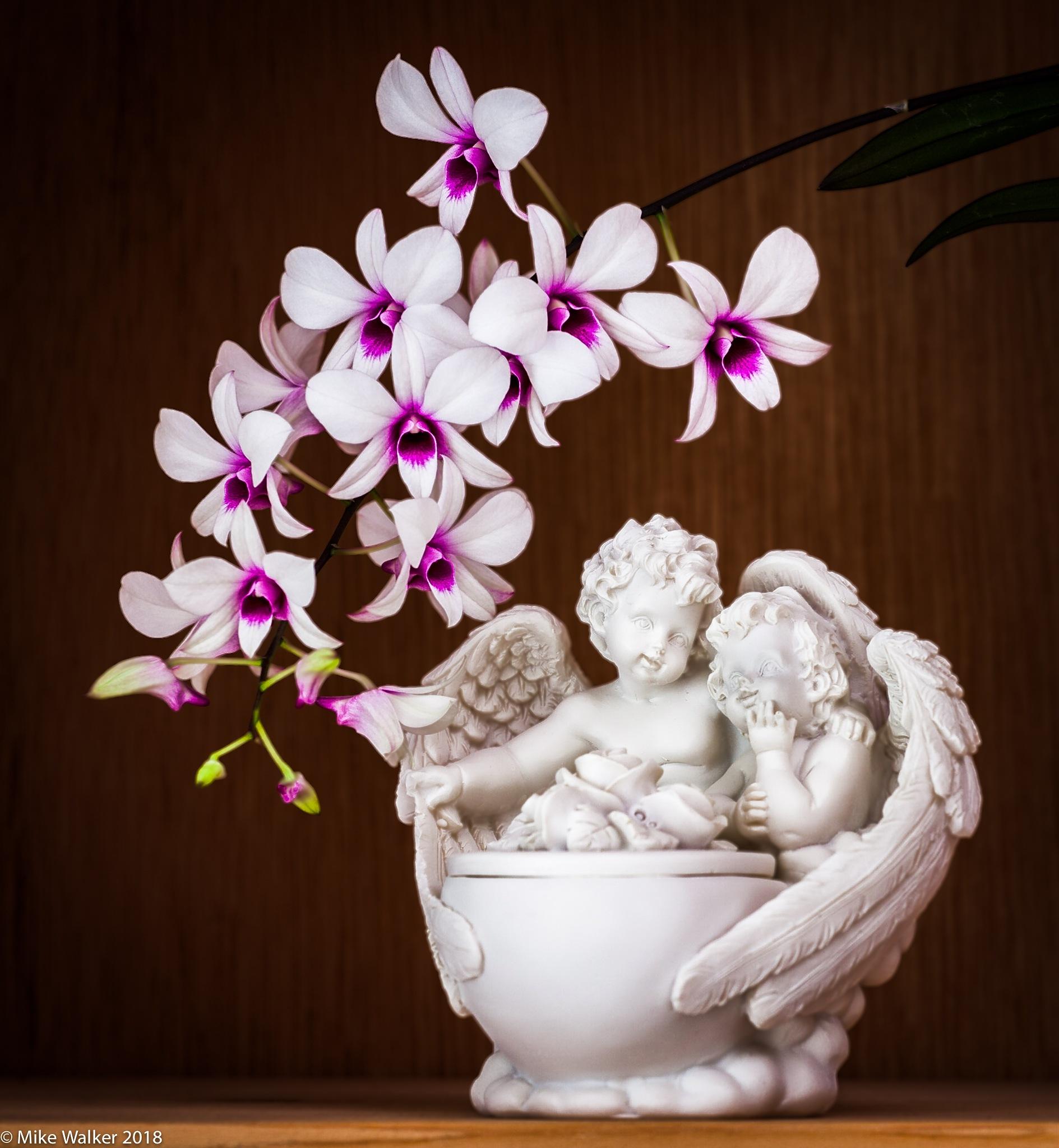 Dendrobium phalaenopsis Display by Mike Walker
