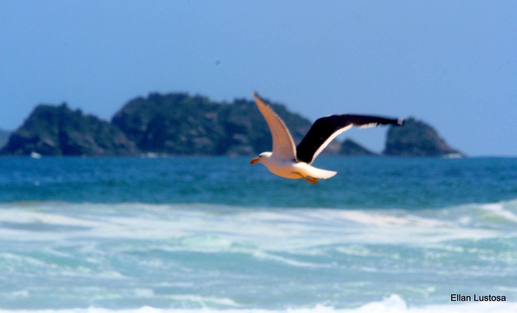 BIRD by Ellan Lustosa Photojournalist