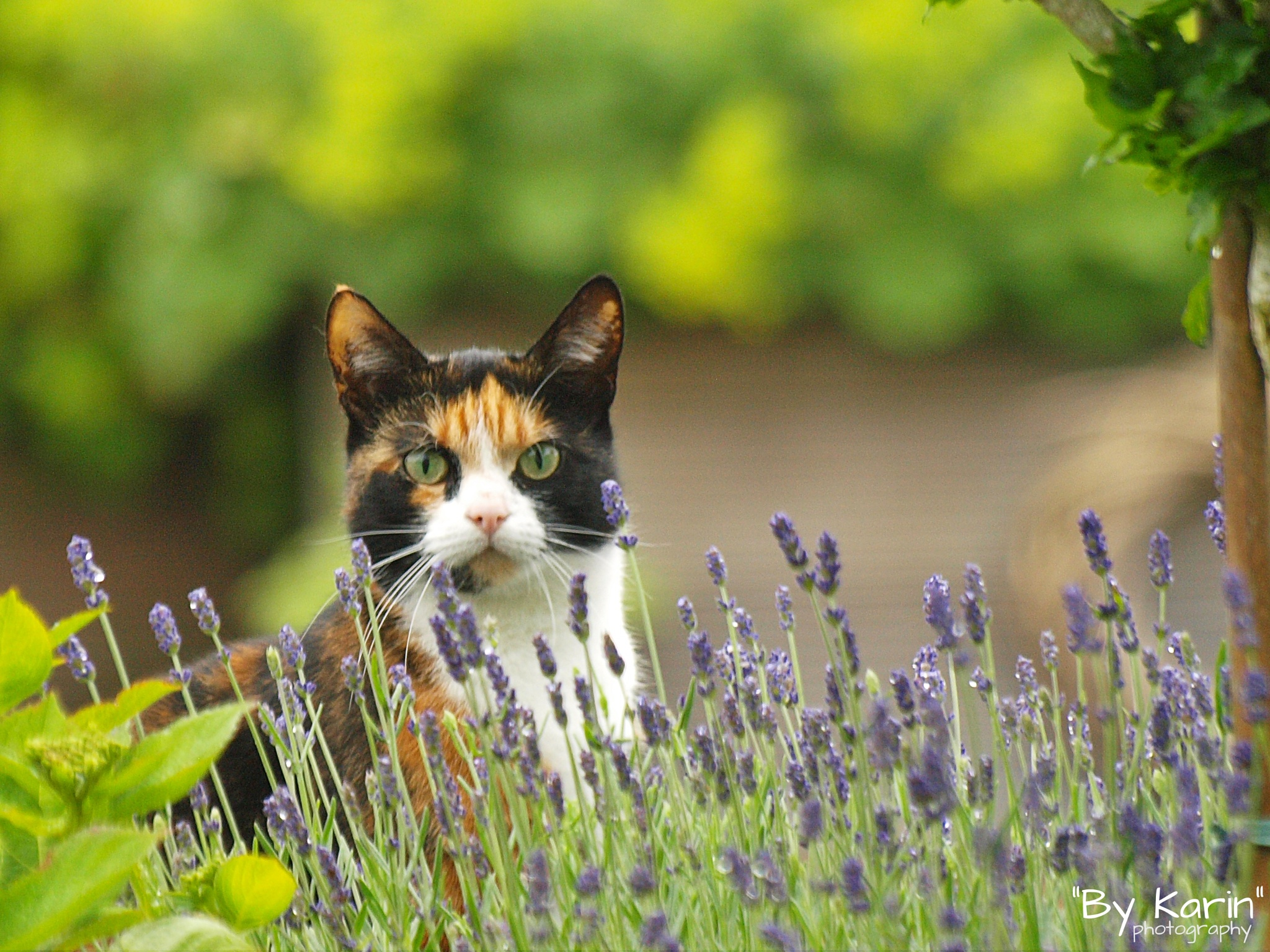 Cat in the backyard  by ByKarinPhotography