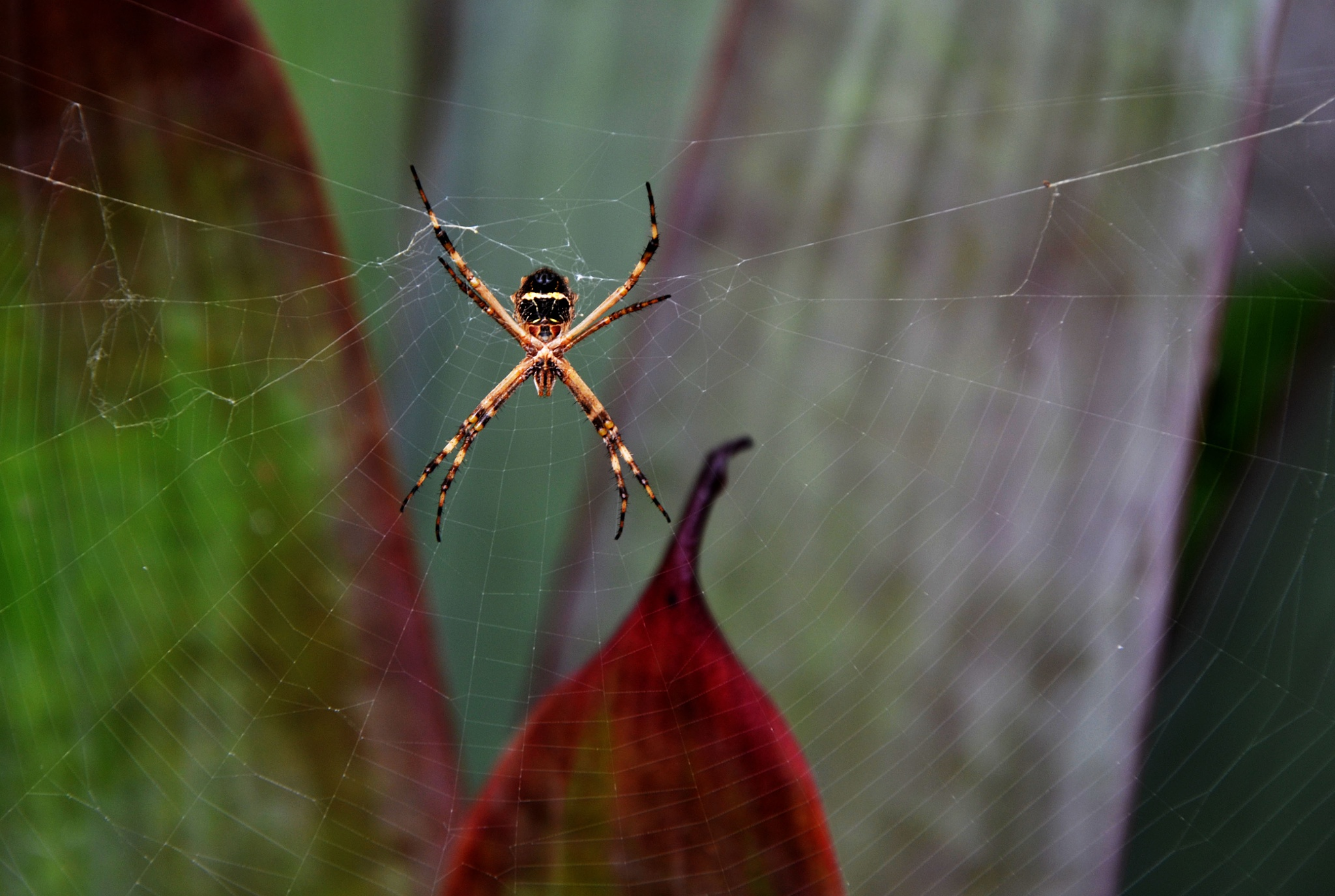 tiny spider by lianderson