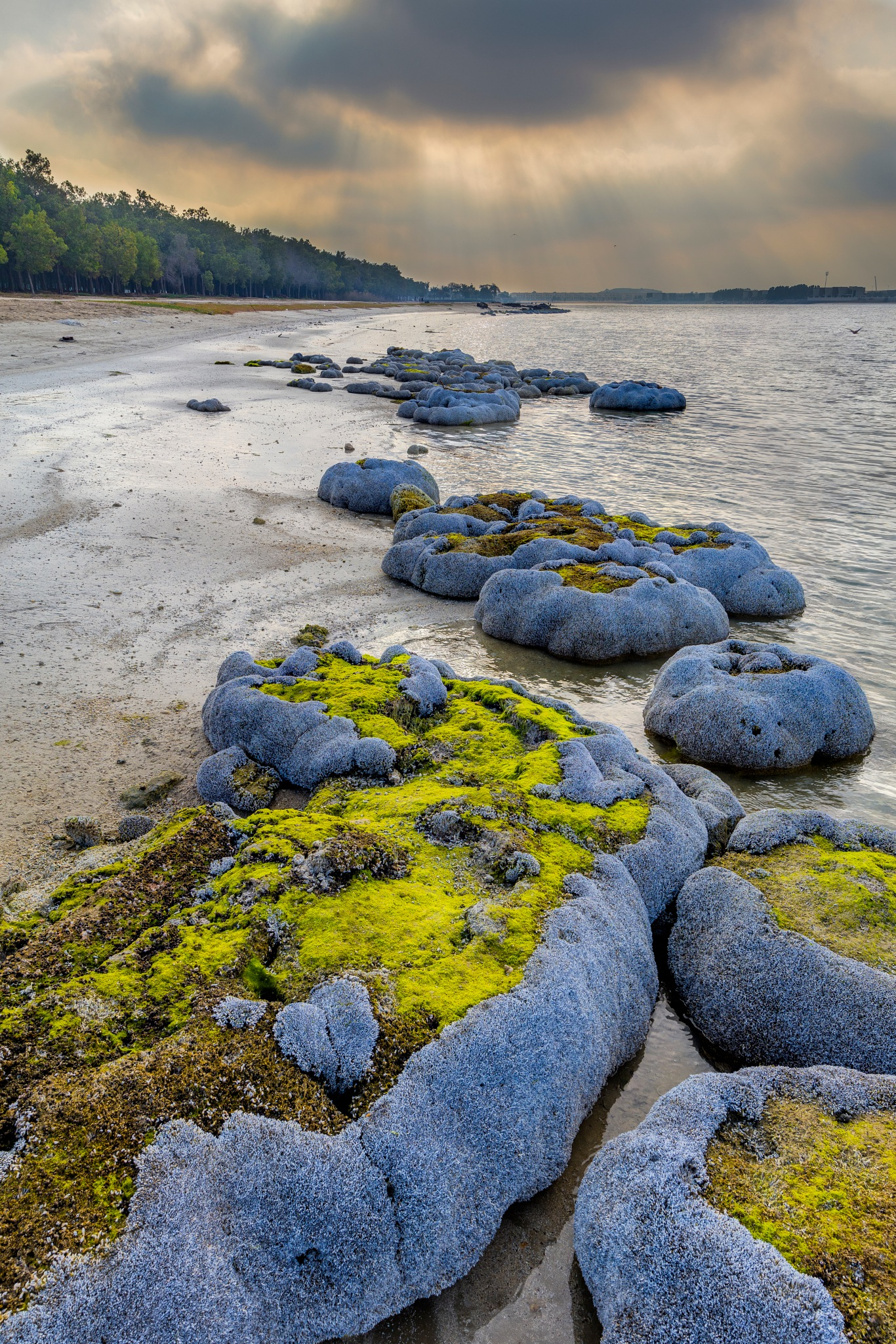The Green Beach by Murshed AlMehairi
