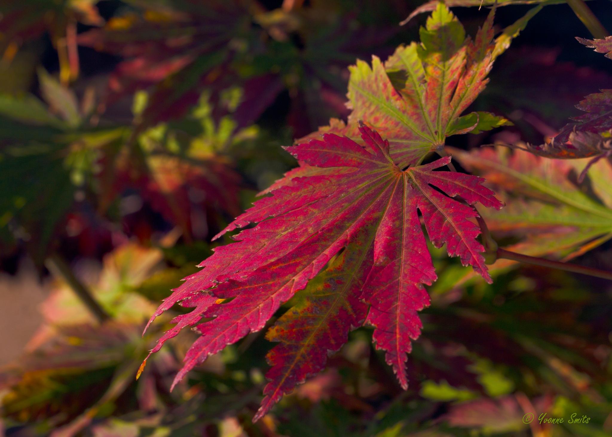 Colorful leaf by Yvonne Smits