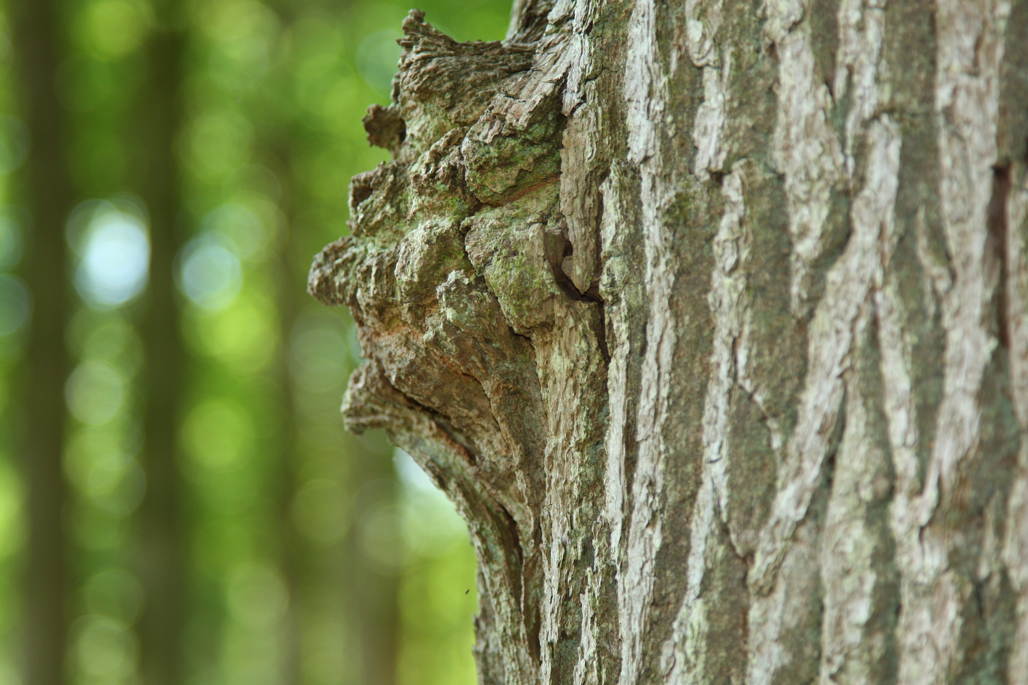 Face on a tree  by Yvonne Smits