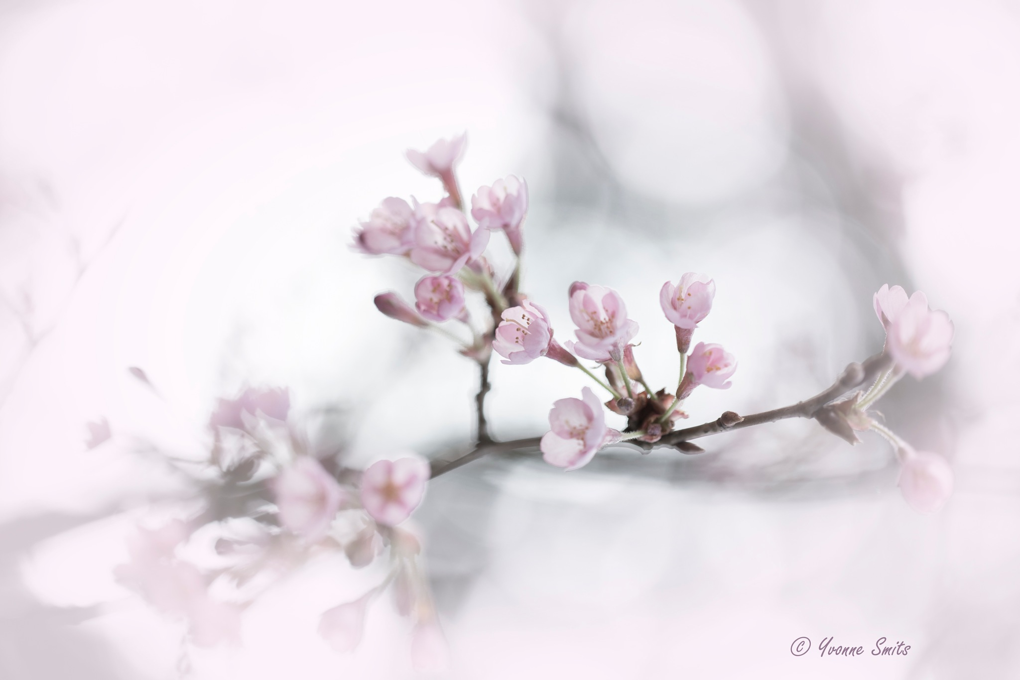 Spring is in the air  by Yvonne Smits