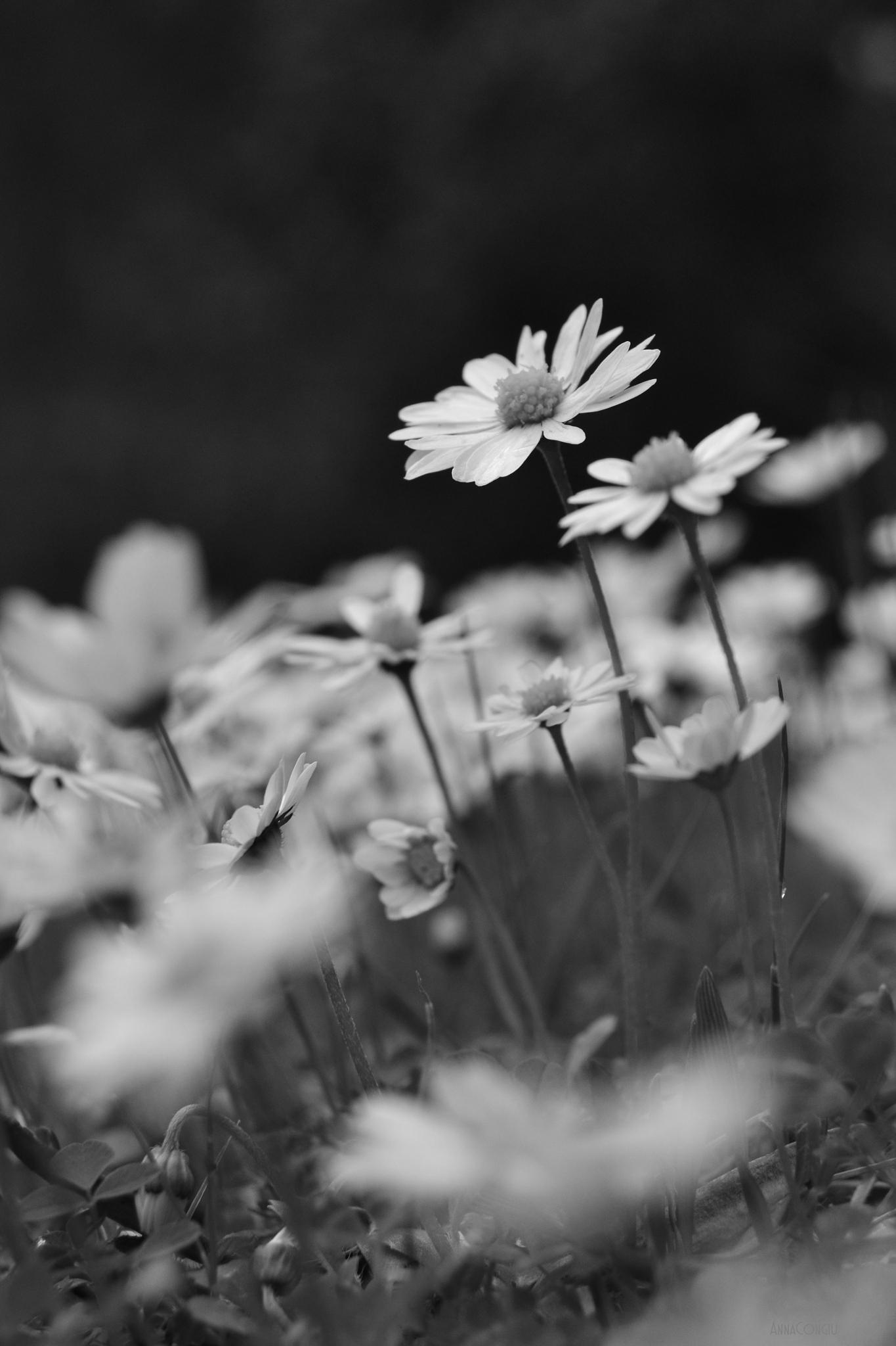 Untitled by Anna Congiu