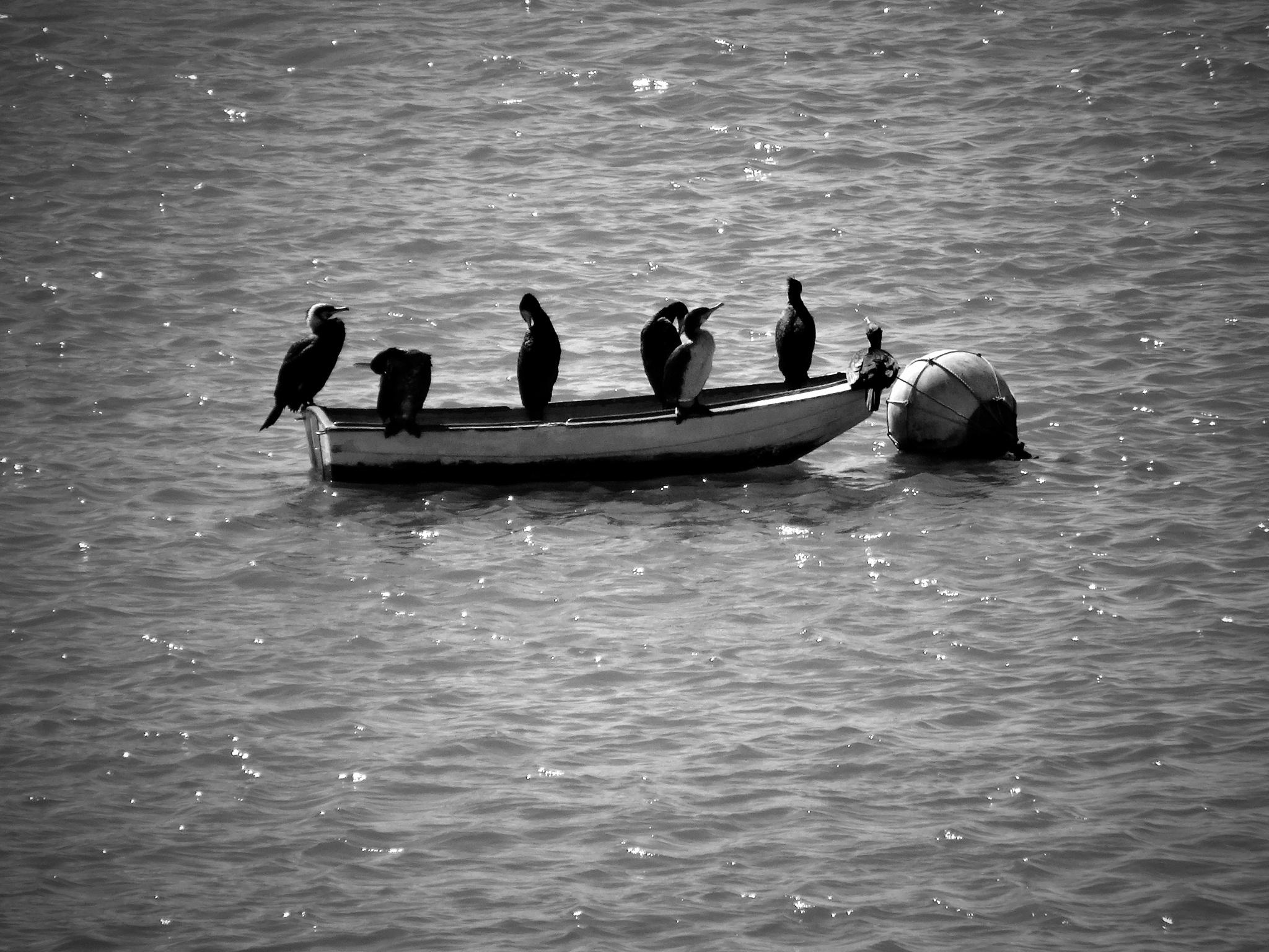 Birds by AndiRocha