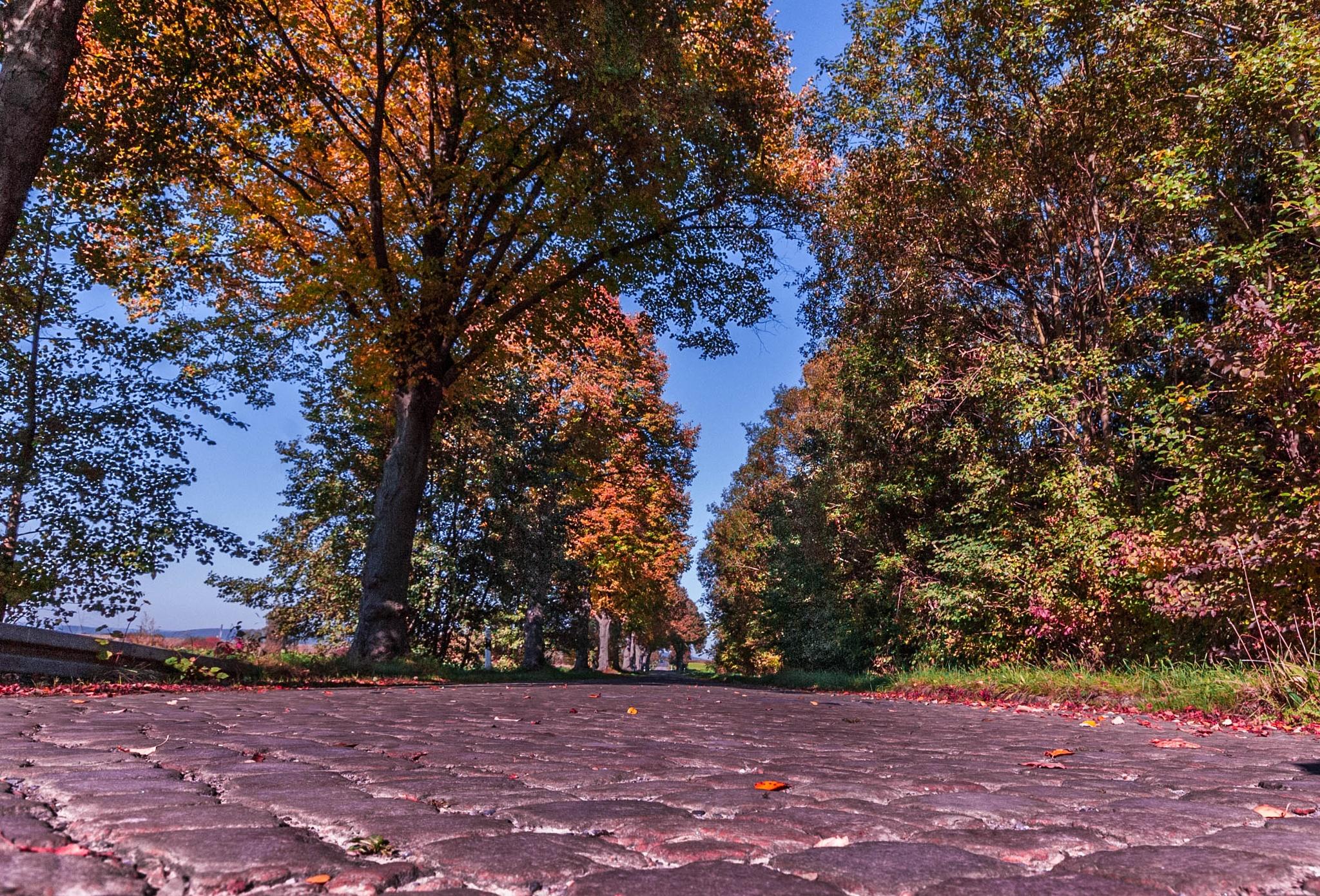 Herbstliche Allee by SRehberg