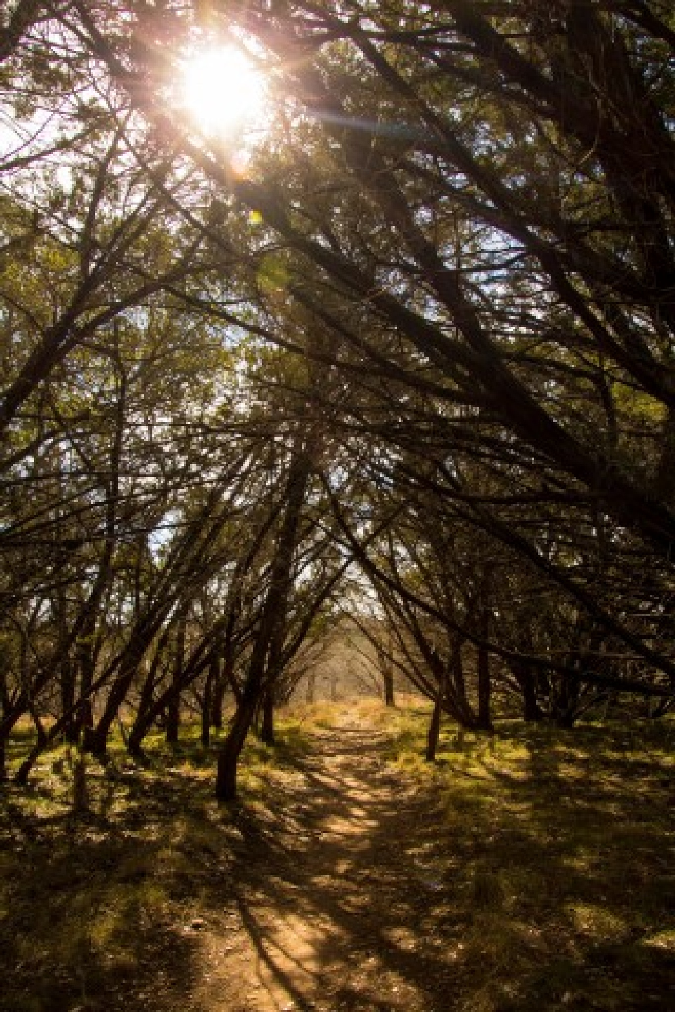 Sun through trees by hhines312