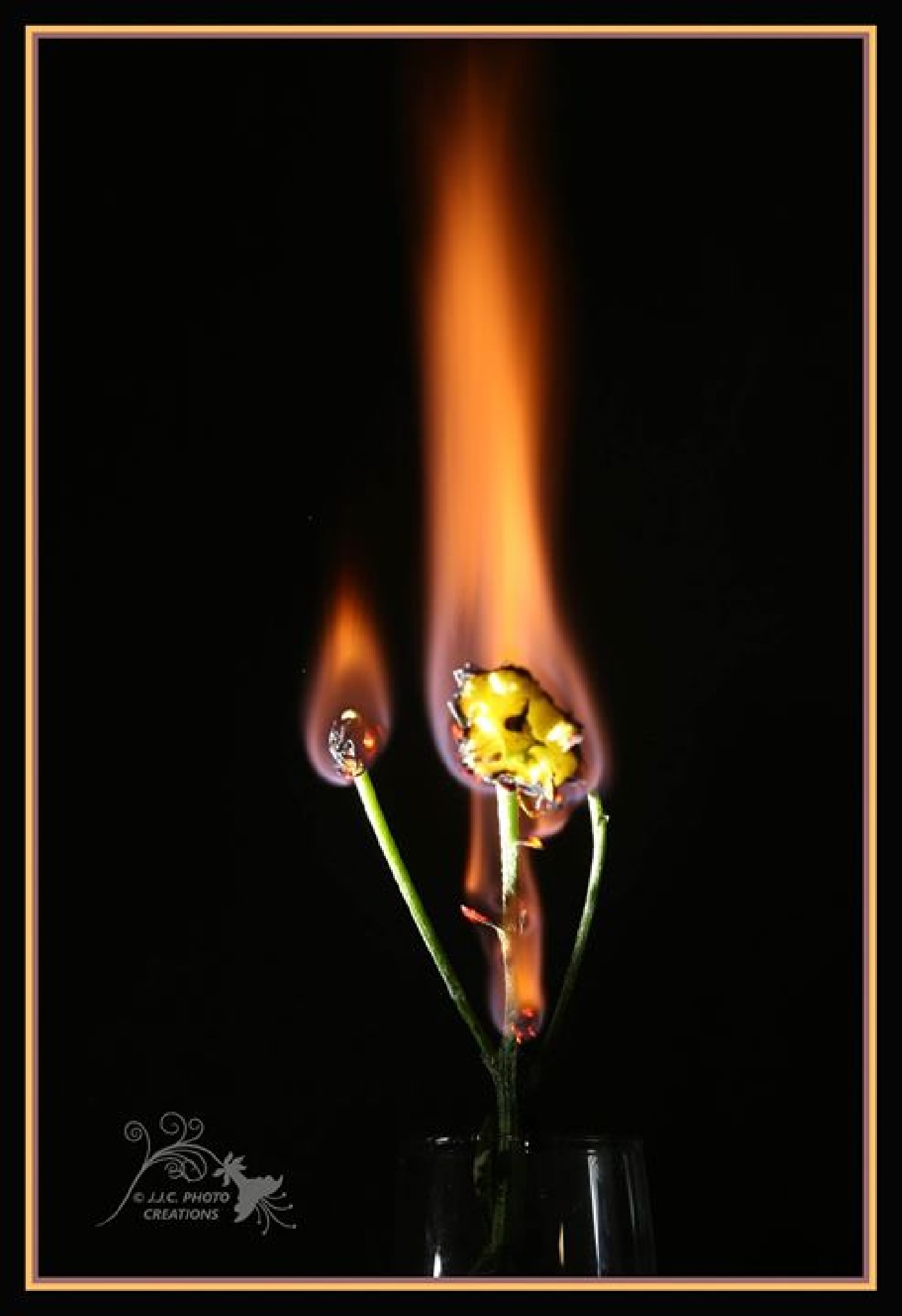 flaming flowers, by LeanneT