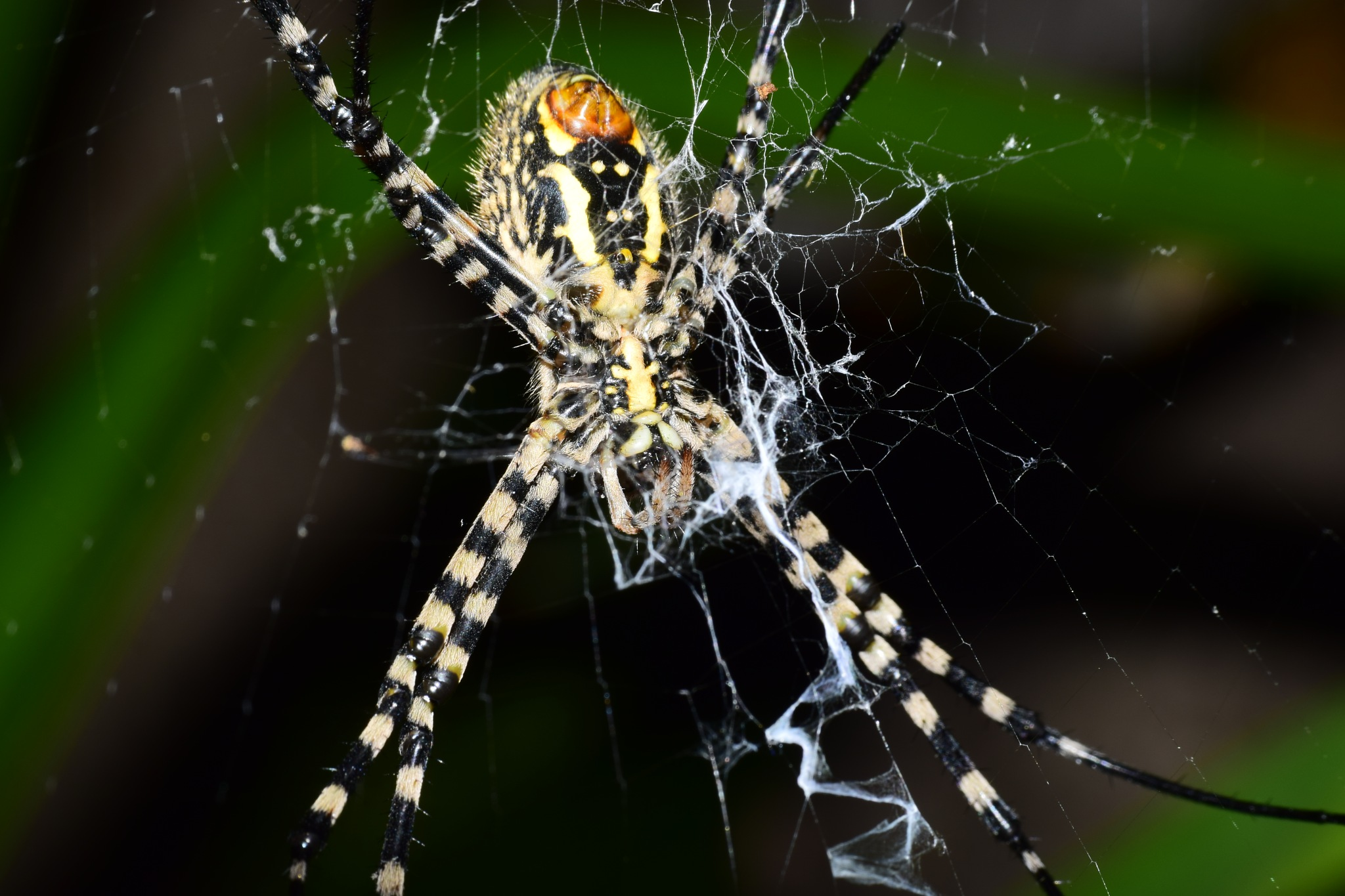 Spider 2 by Dinarte Rodrigues