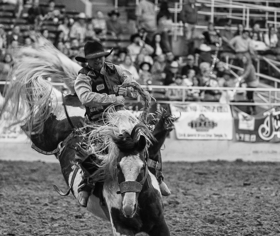 Rodeo Night in Texas  by Christopher Winston