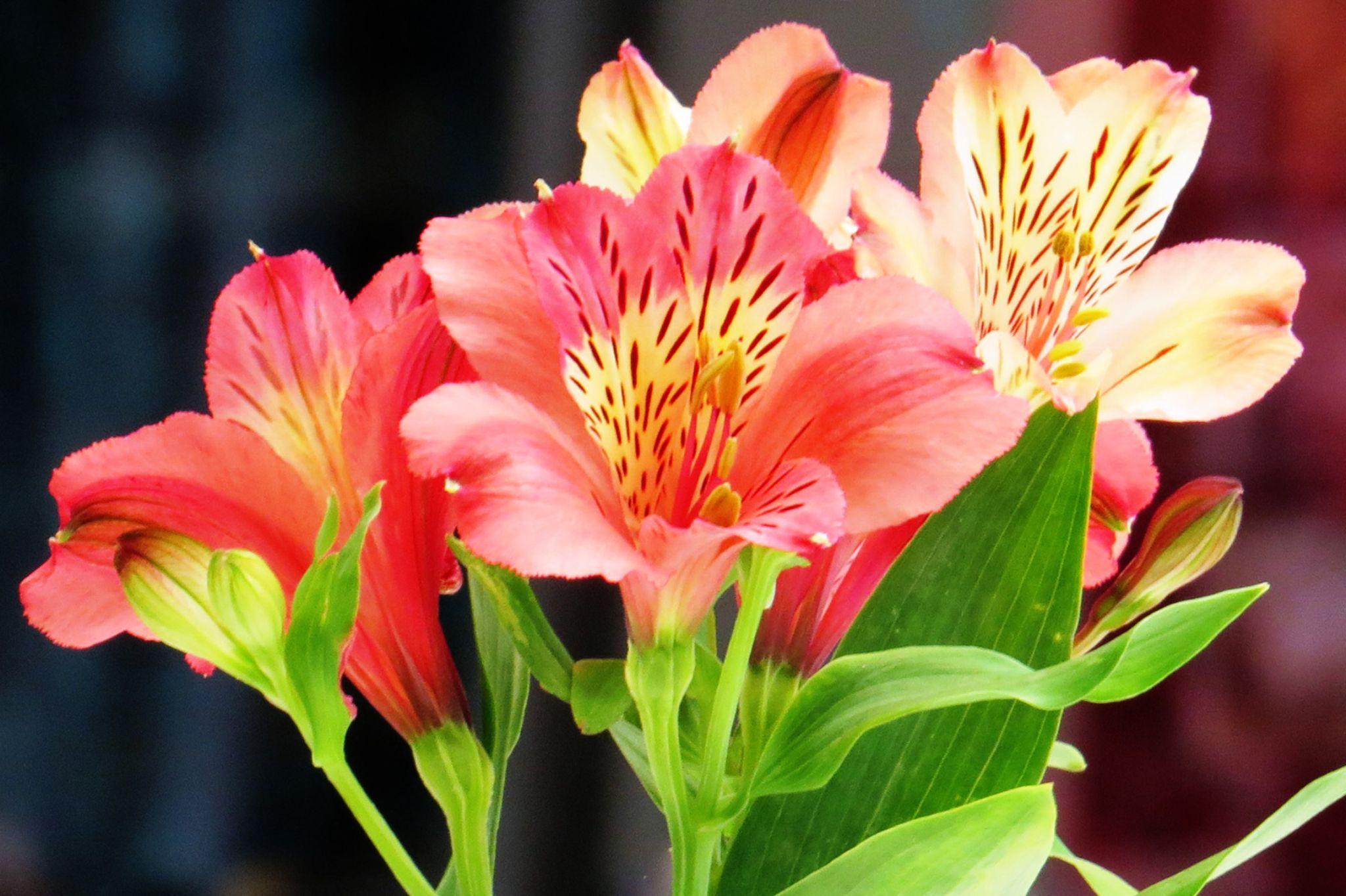 Flowers by Jo-Ann de Smit
