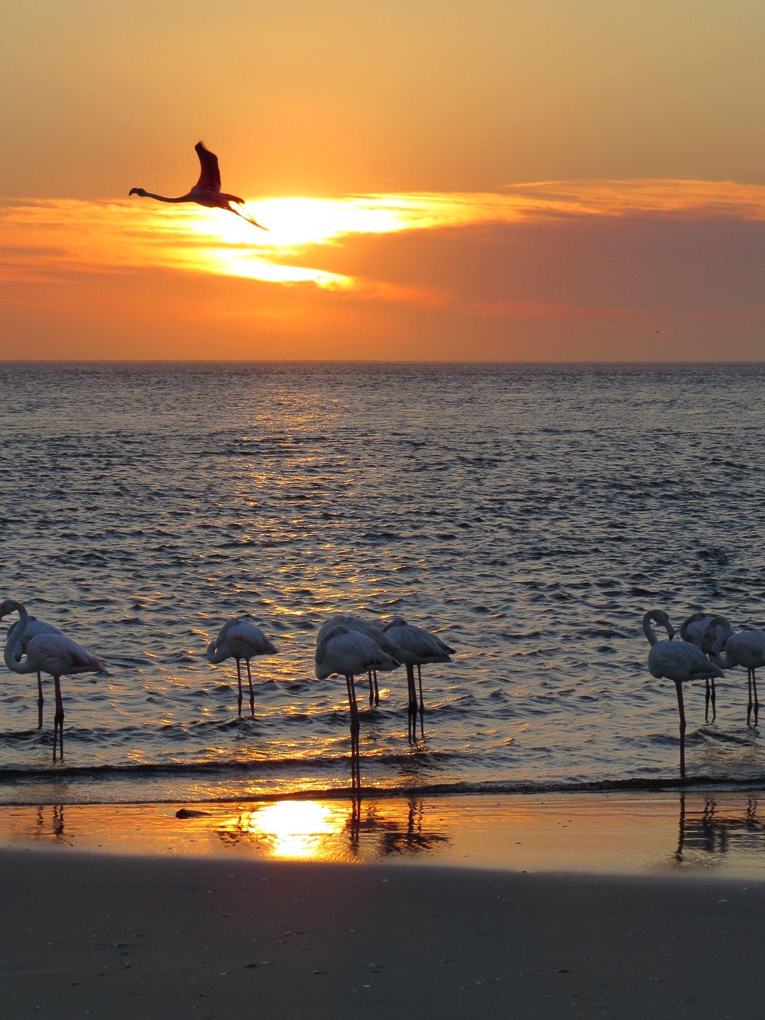 Flamingo's at Sunset by Jo-Ann de Smit