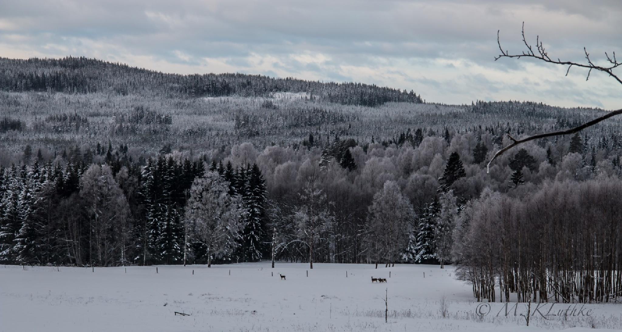 Rehe im Schnee / Rådjur i snö by Mrgit Kluthke