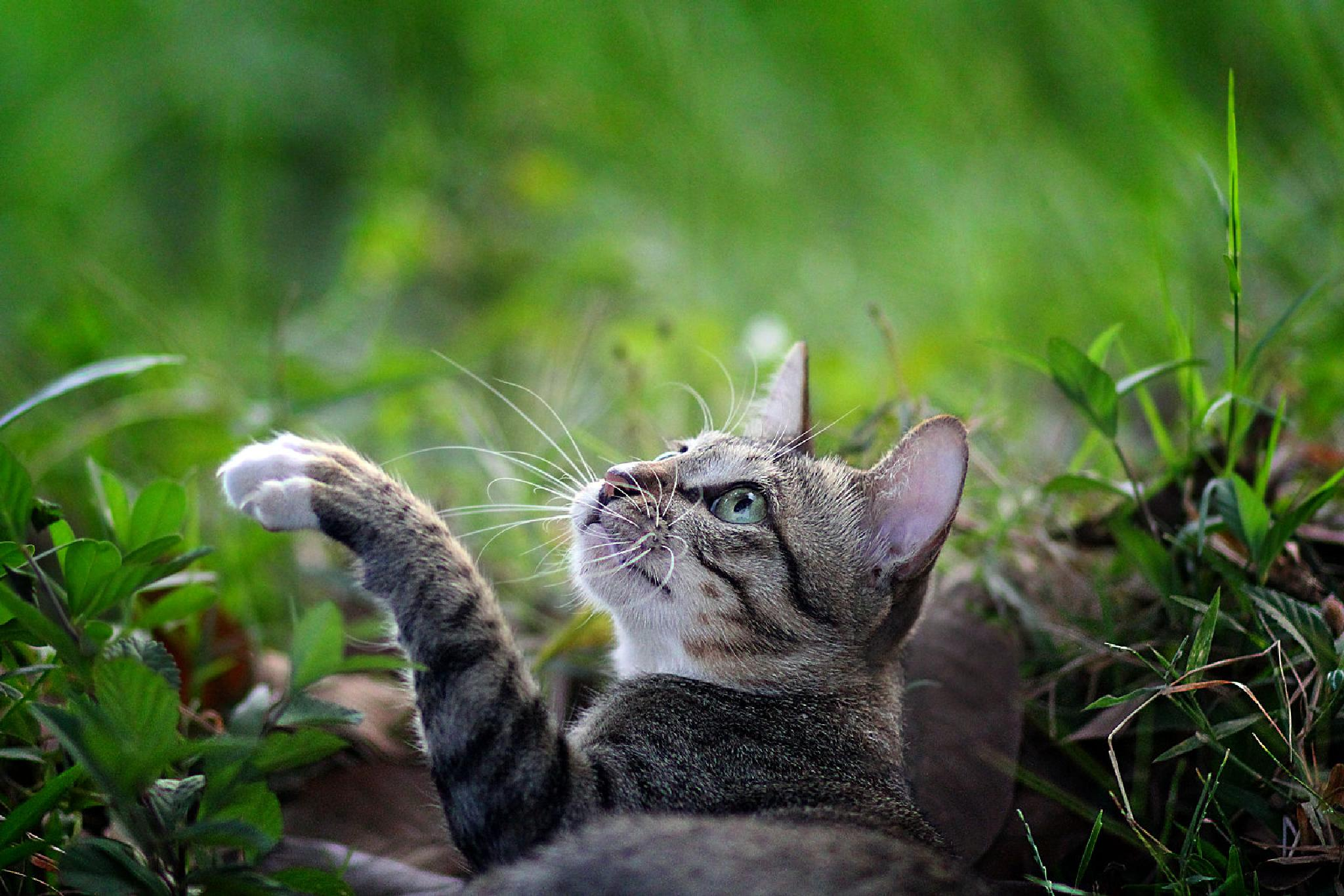 Han.. cat name. by Kenny Sudharto