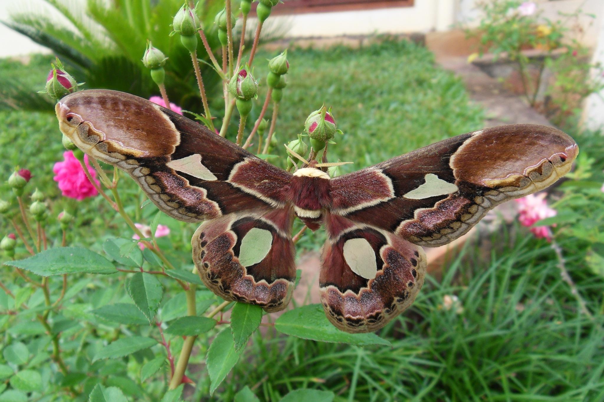 Moth by mmbpar